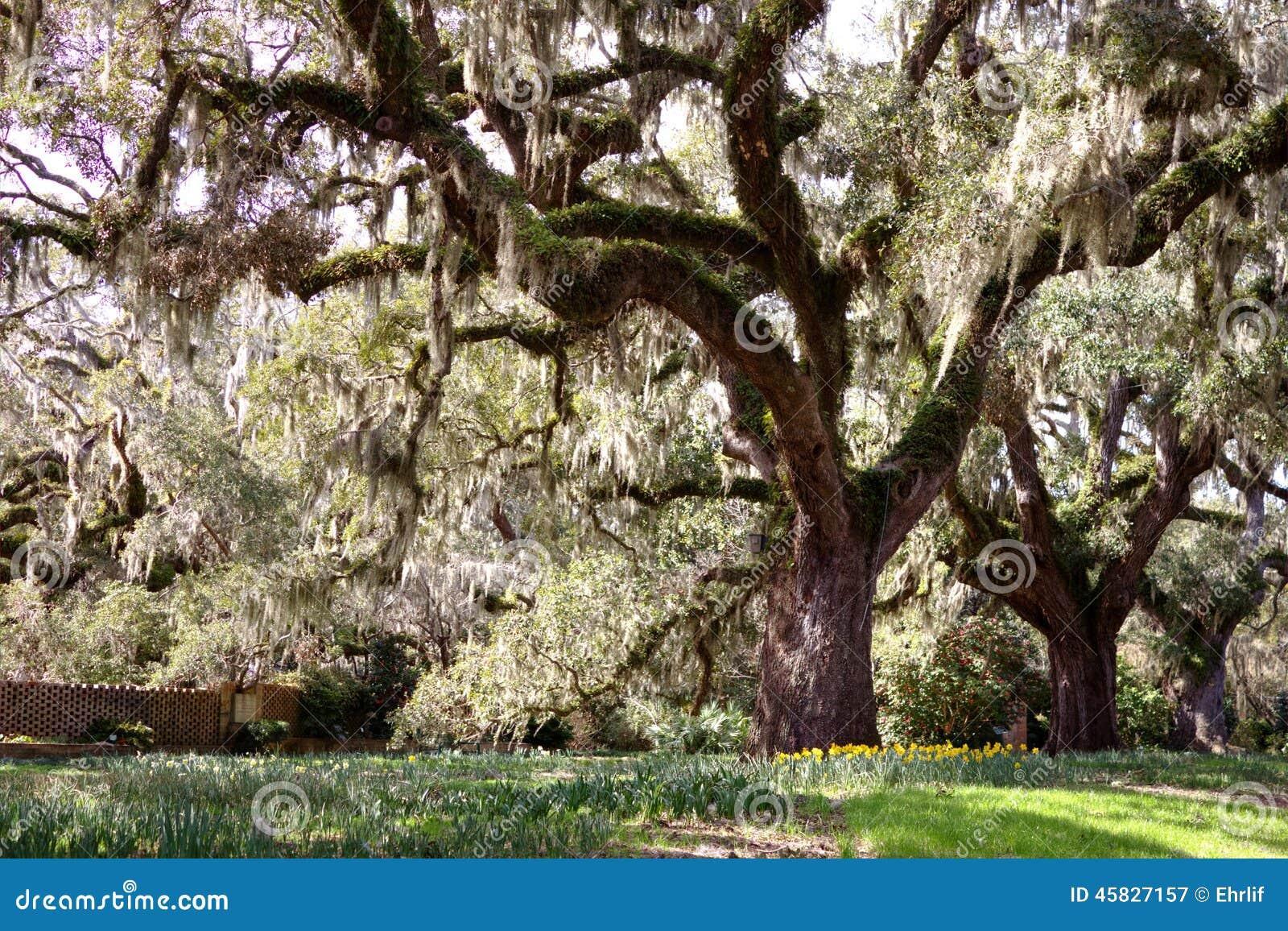 Onder de eiken boom
