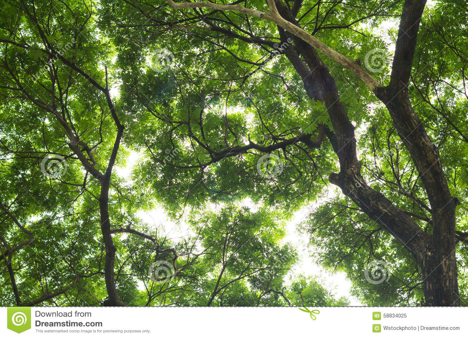 Onder mening van grote boom toon detail groene bladeren voor backgroun