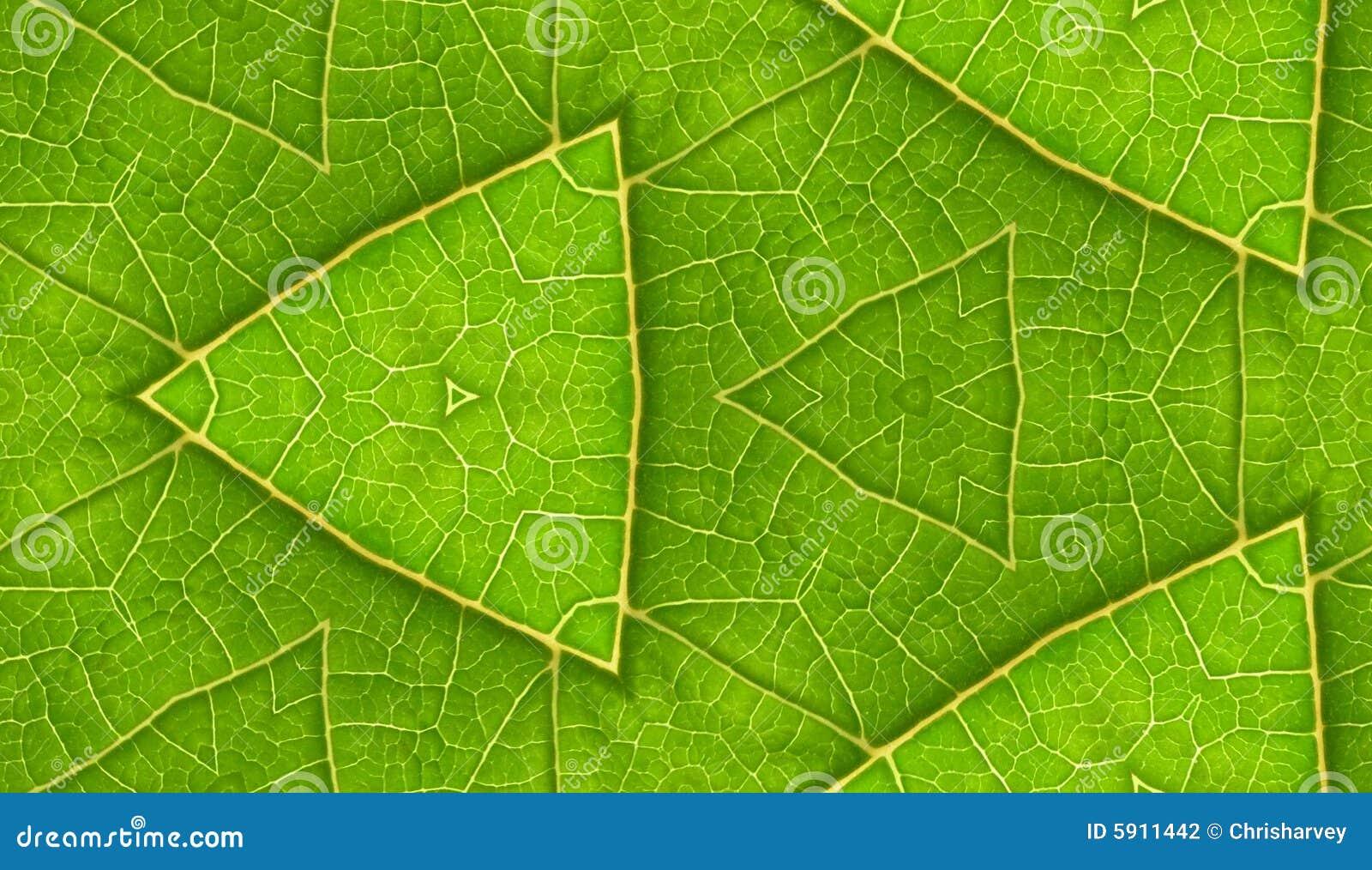 Onderkant van de Groene Achtergrond van de Tegel van het Blad Naadloze