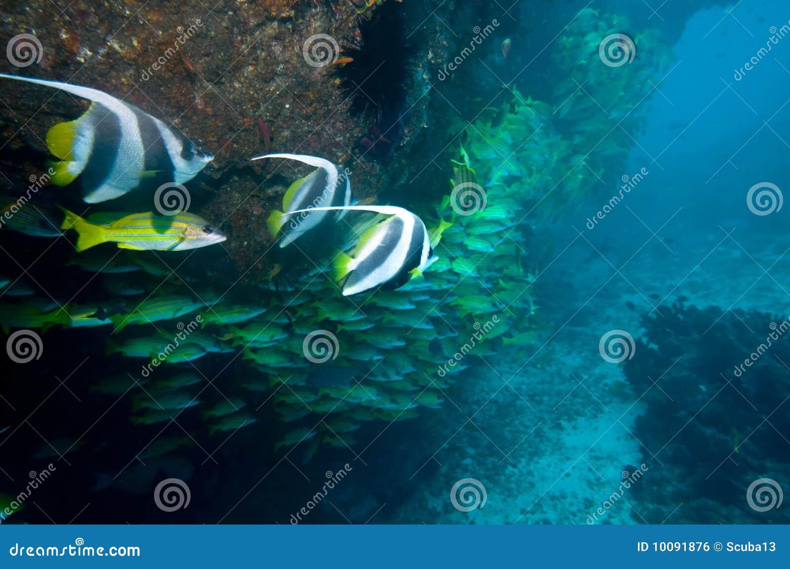 Onderwater koraalrif
