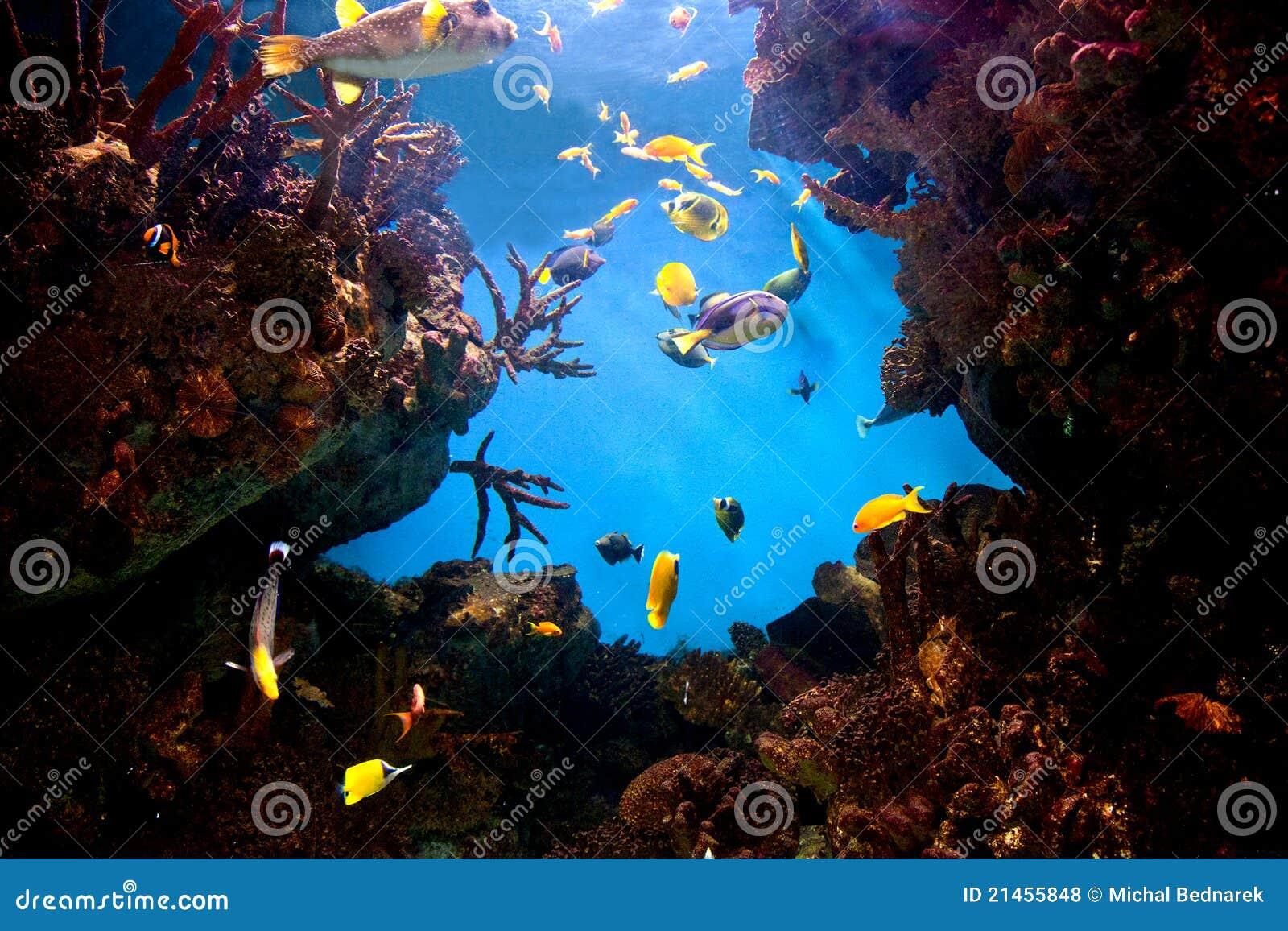 Onderwater mening, vissen, koraalrif