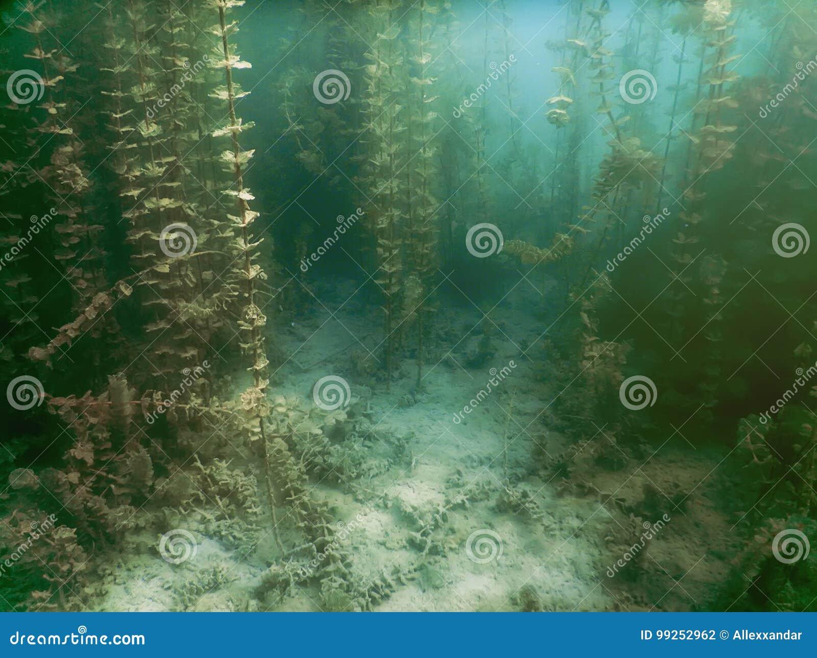Onderwaterflora Onderwaterinstallatiesrivieren, meren, vijver