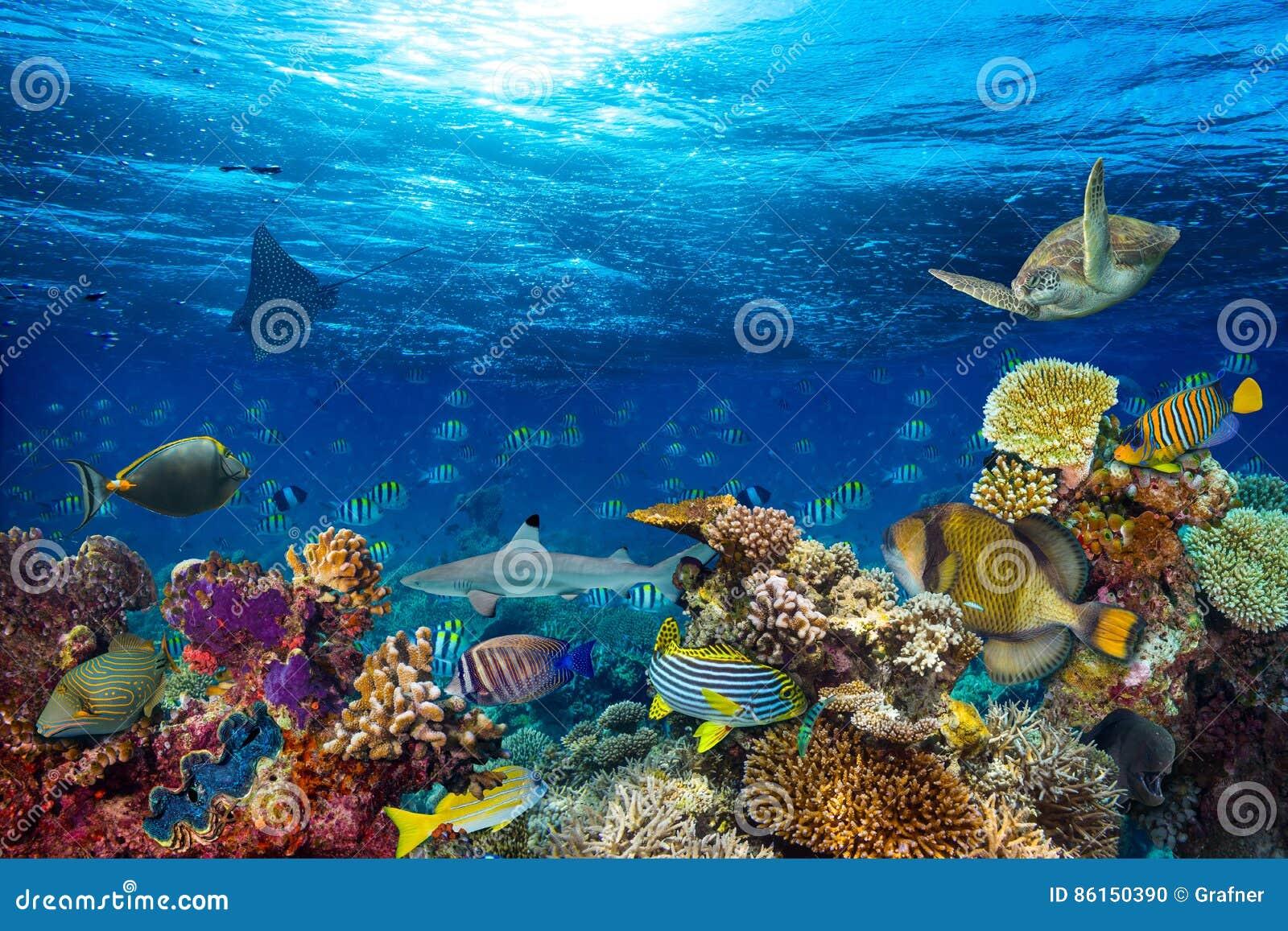 Onderwaterkoraalriflandschap