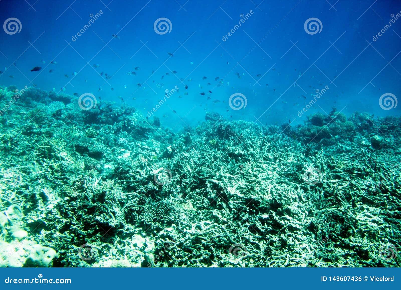 Onderwaterkoraalriflandschap in Egypte