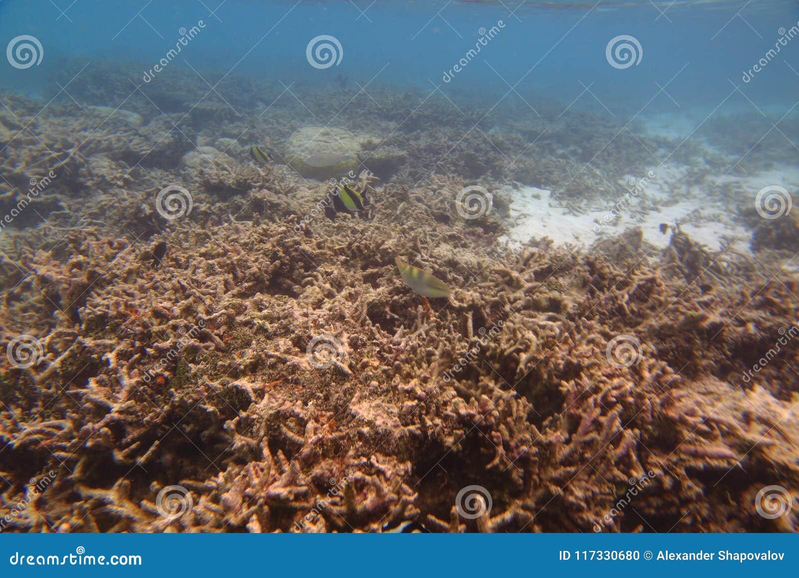 Onderwatermening van dode koraalriffen en mooie vissen snorkeling Indische Oceaan