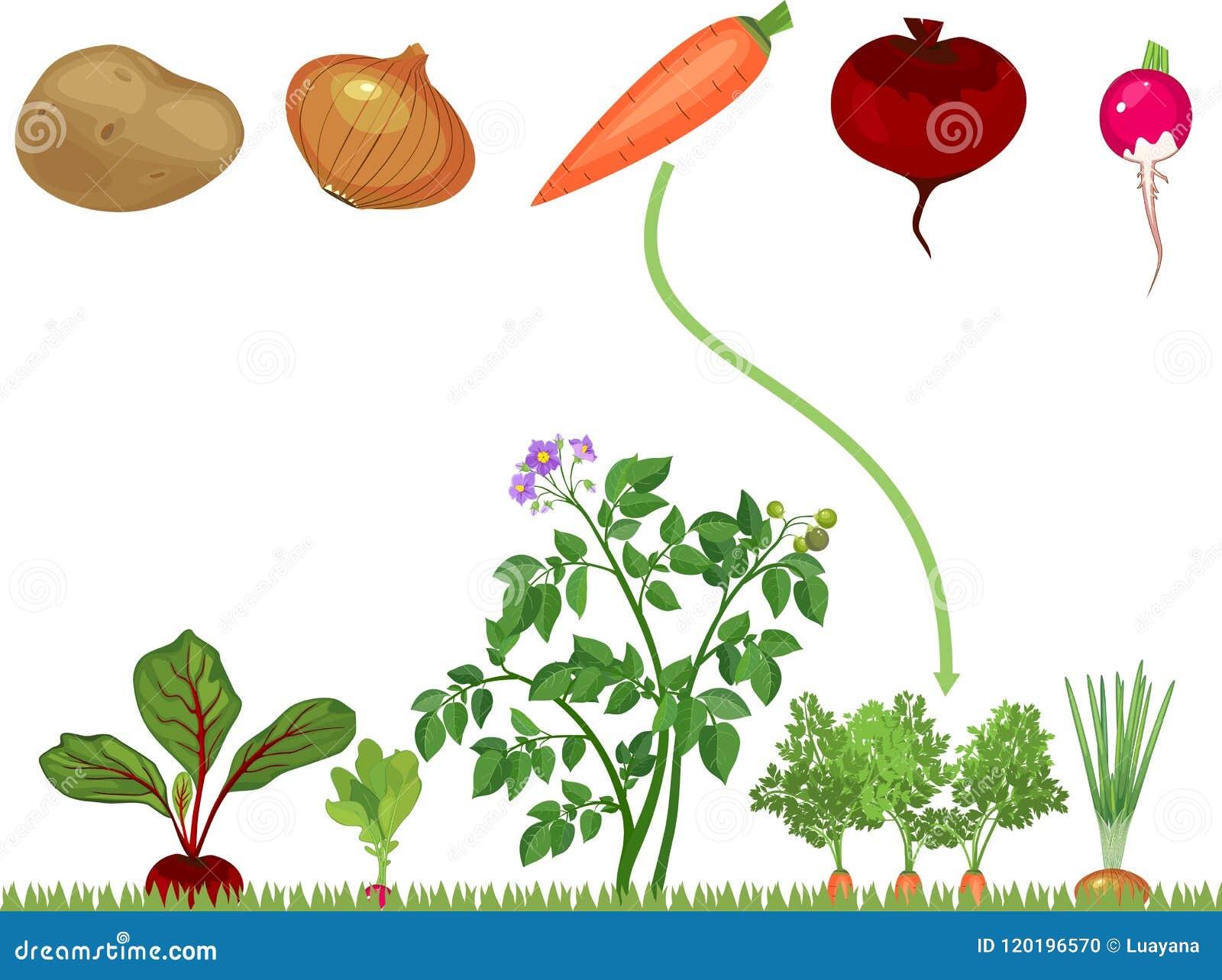 Onderwijskinderen die spel voor kinderen aanpassen Groenten op plantaardig flard