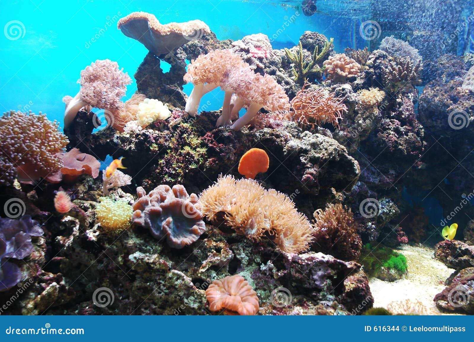 Onderzees
