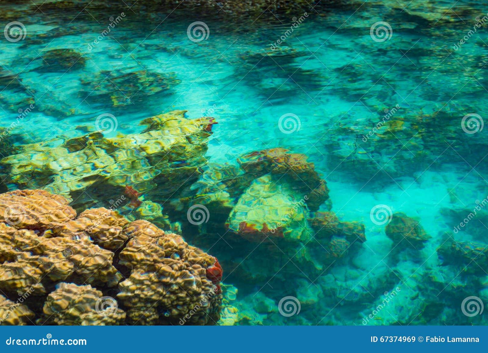 Ondiep koraalrif in turkoois transparant water, Indonesië