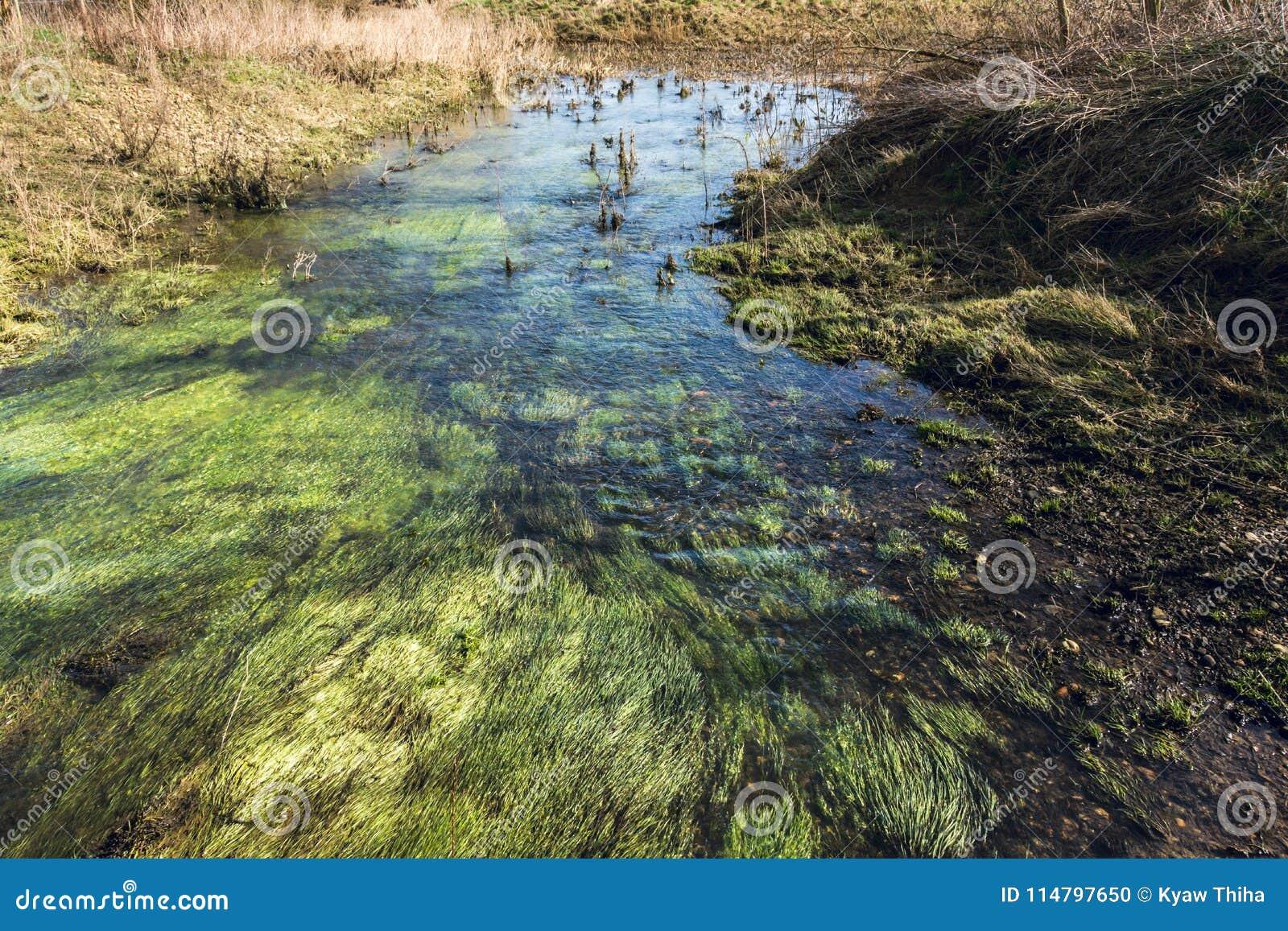 Ondiep water die op moerasland bij het Bos van Alluviale gebieden stromen