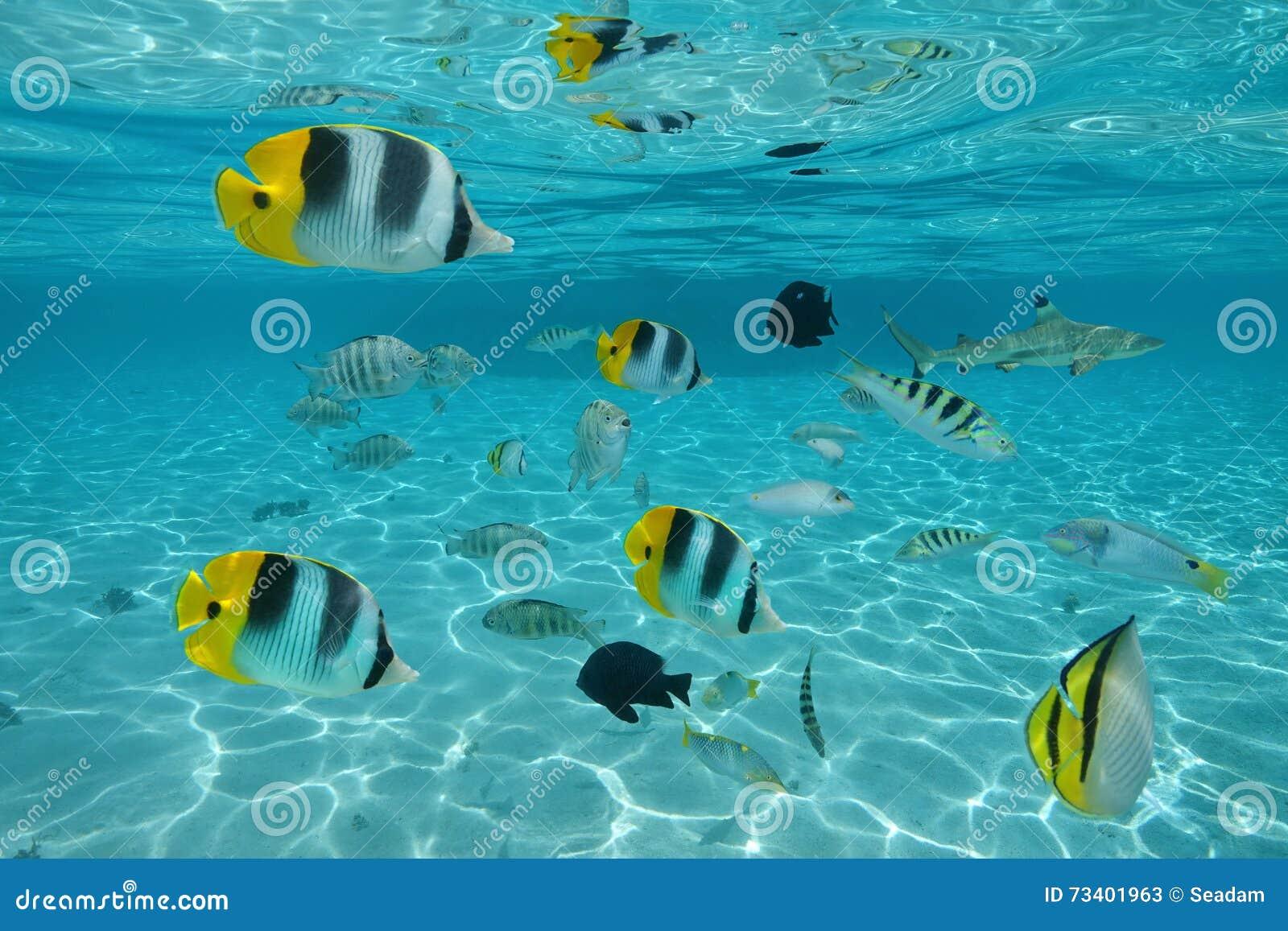 Ondiepte van tropische vissen in ondiep water