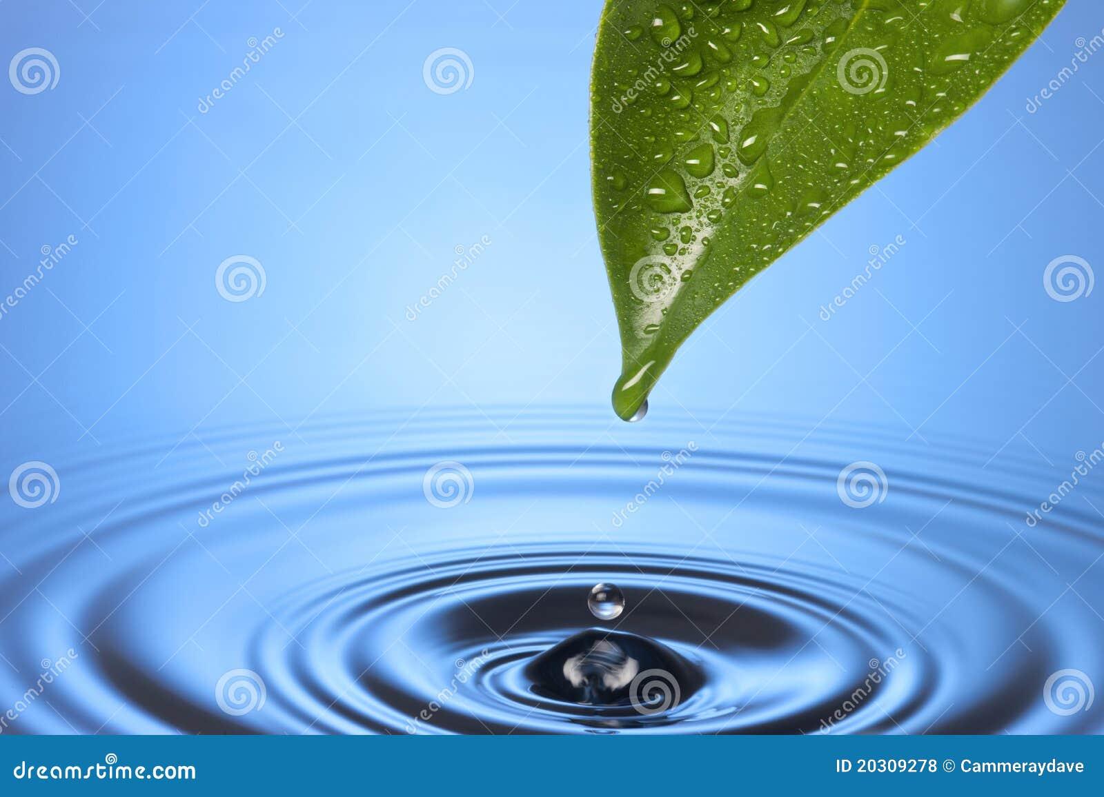 Ondinhas da folha da gota da água