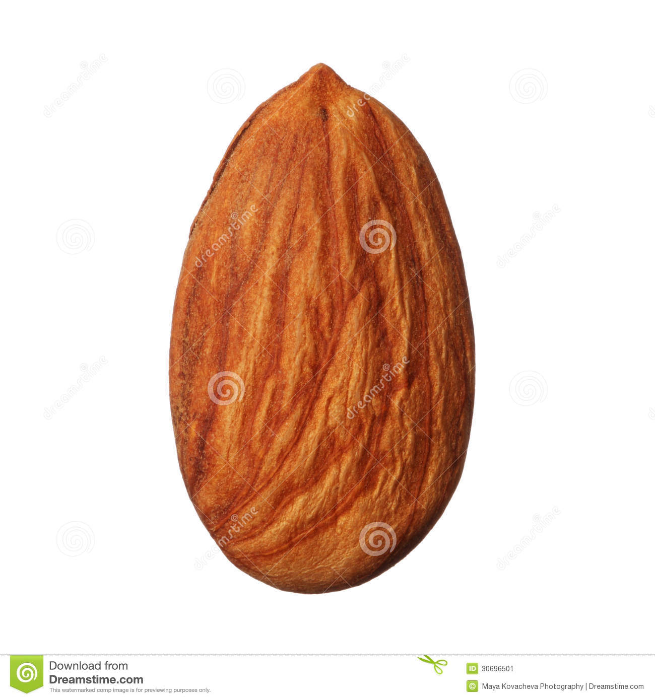 One almond isolated on white background