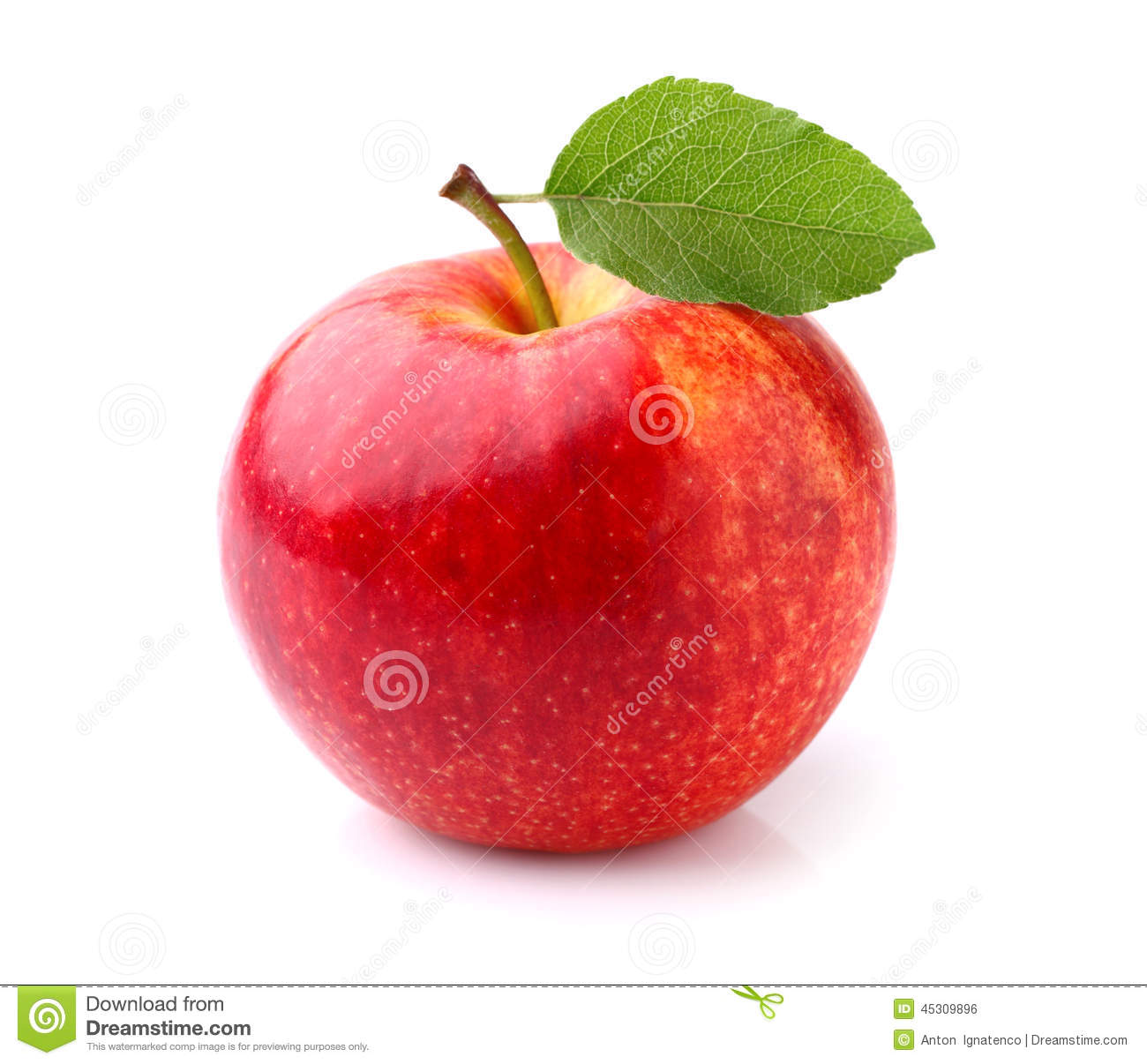 Download One apple stock photo. Image of closeup, leaf, stem, white - 45309896
