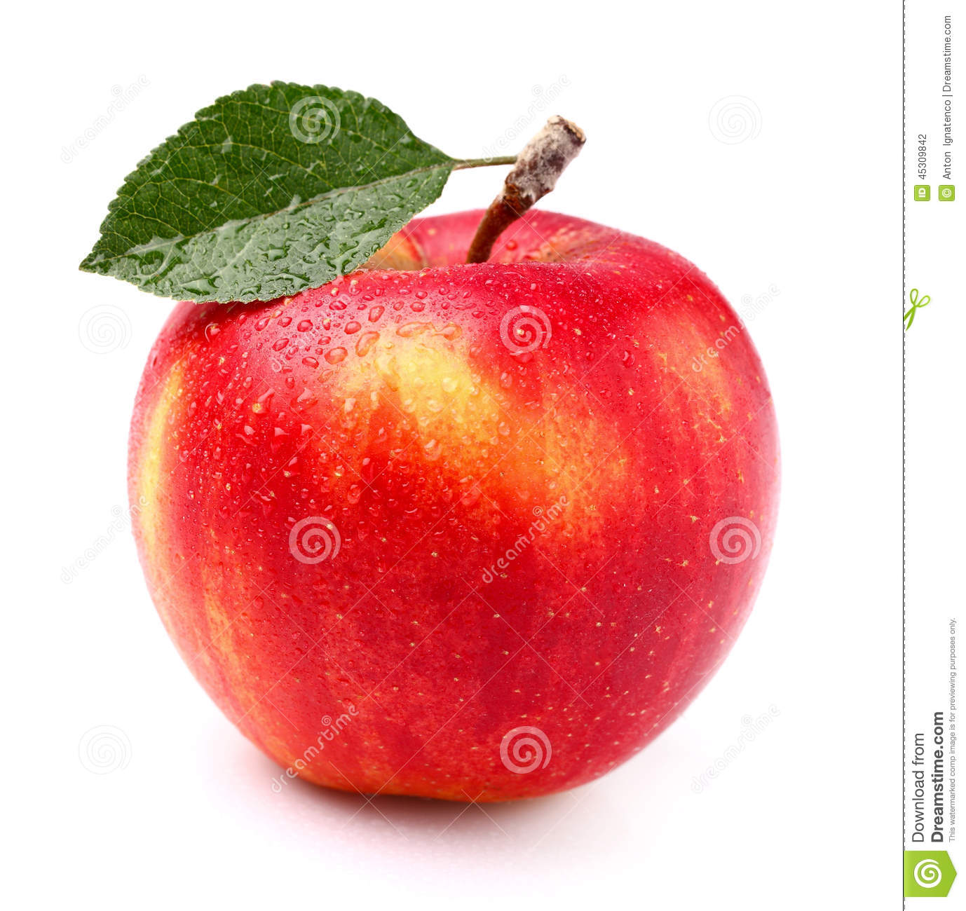 one apple stock photo image of object stem healthy 45309842