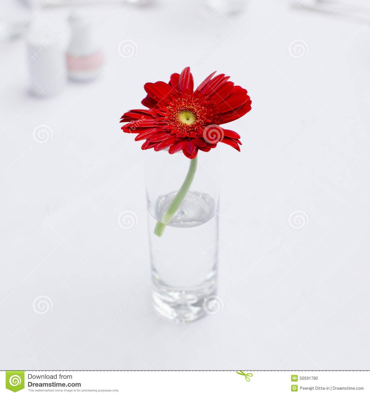 One Beautiful Flower In Glass Vase On Coffee Table Stock