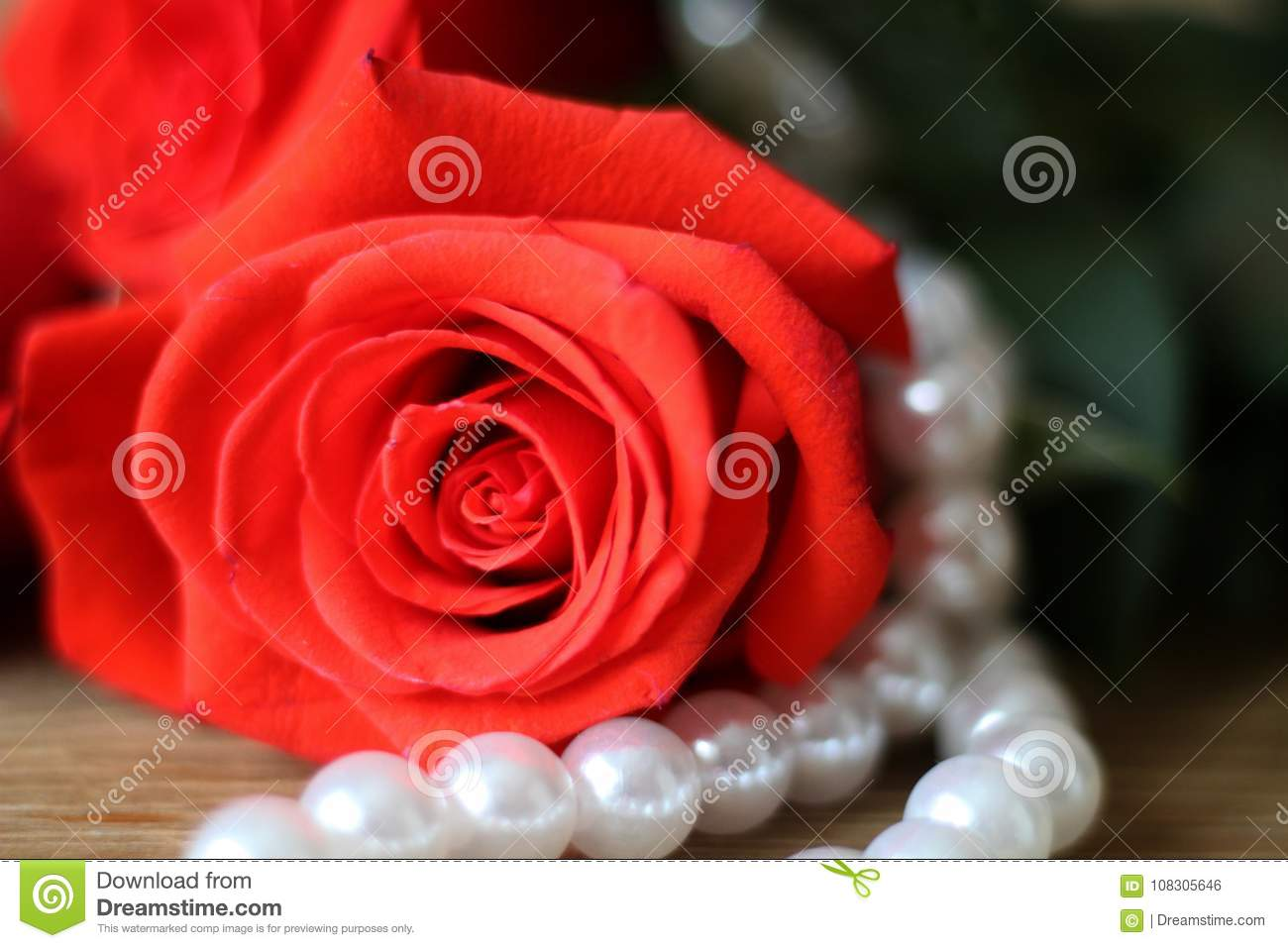 One Beautiful Red Rose Lying Ona Woodentable A White Pearl ...
