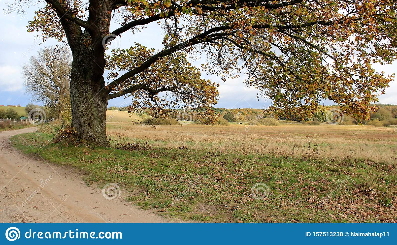 7 606 Quiet Pasture Photos Free Royalty Free Stock Photos From Dreamstime
