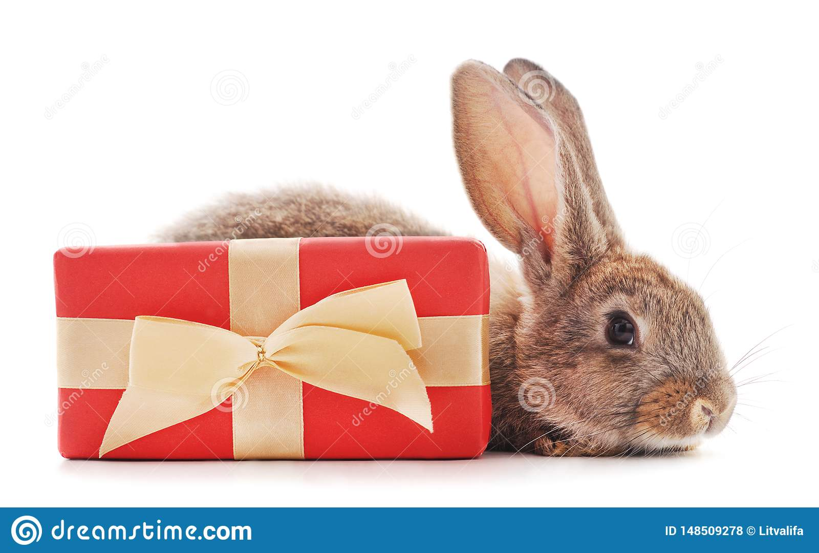 One brown rabbit with gift