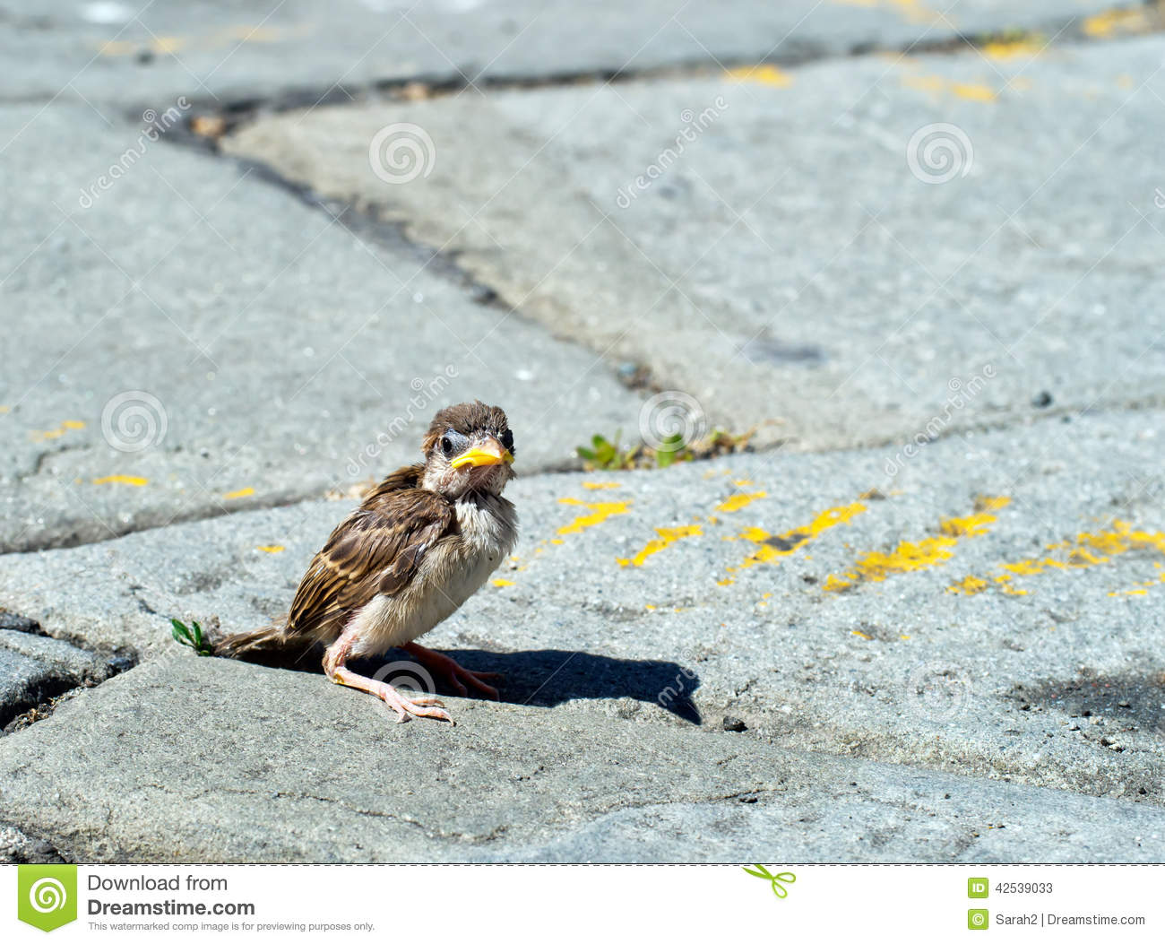 One Fallen Sparrow In Street Biblical Parable Or Metaphor Maybe
