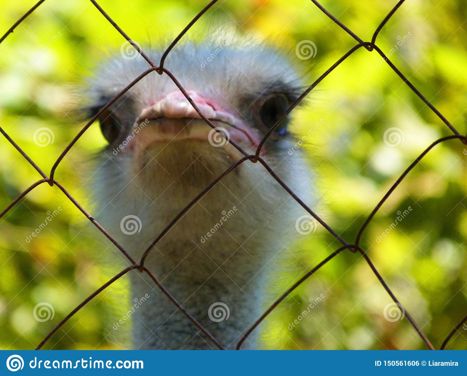 One really funny and adorable ostrich