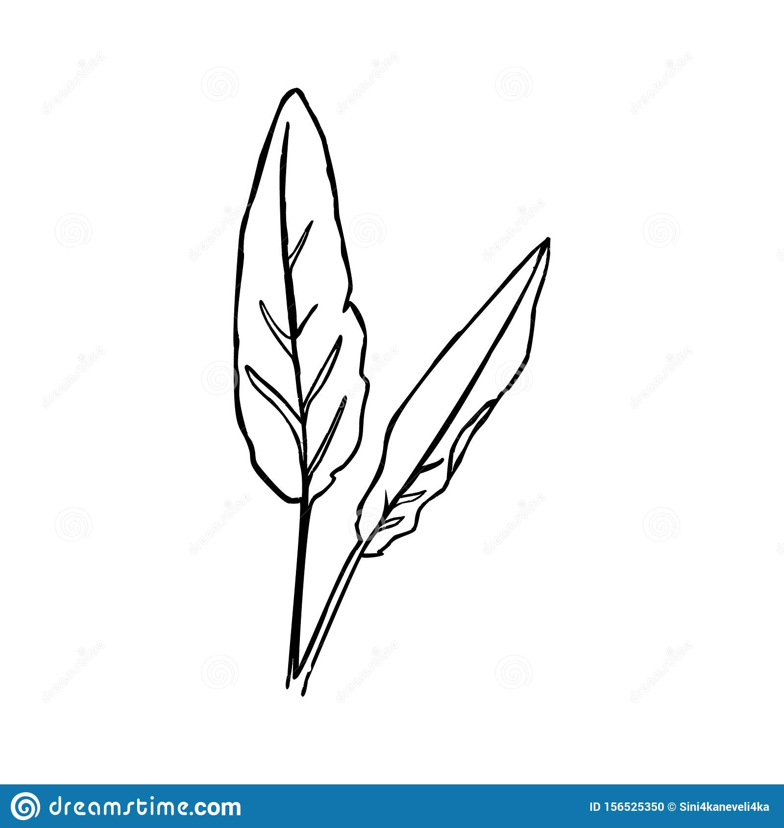 One Line The Banana Leaf Continuous Line Tropical Plant In A Modern Minimalist Style Vector Illustration Stock Vector Illustration Of Minimal Drawing 156525350