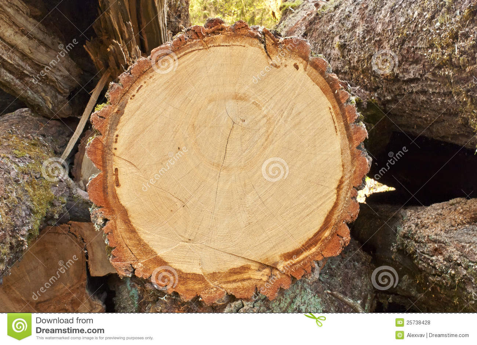 One log closeup