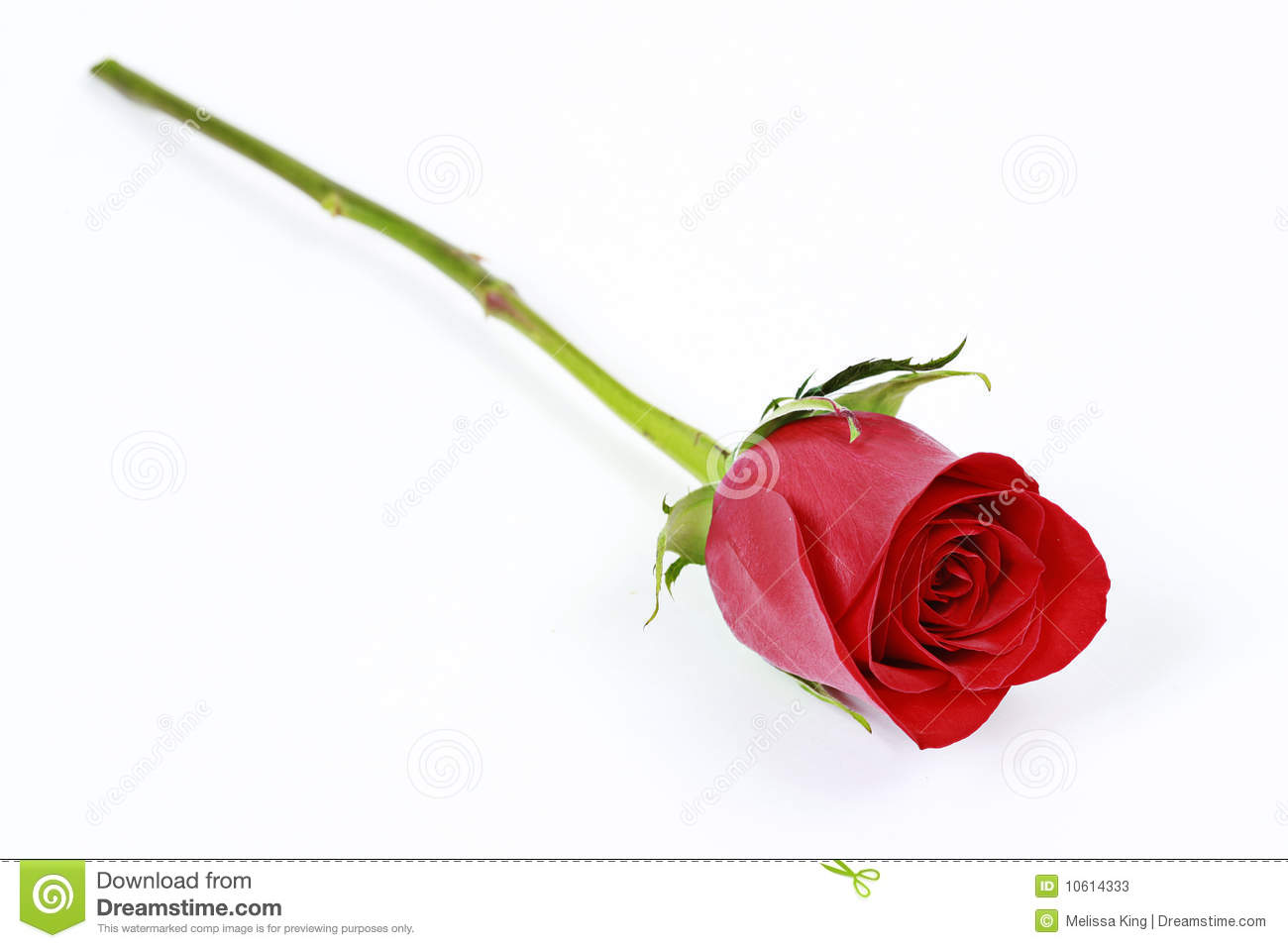 Single Red Rose Flower Stock Images: One Long Stem Red Rose Stock Images