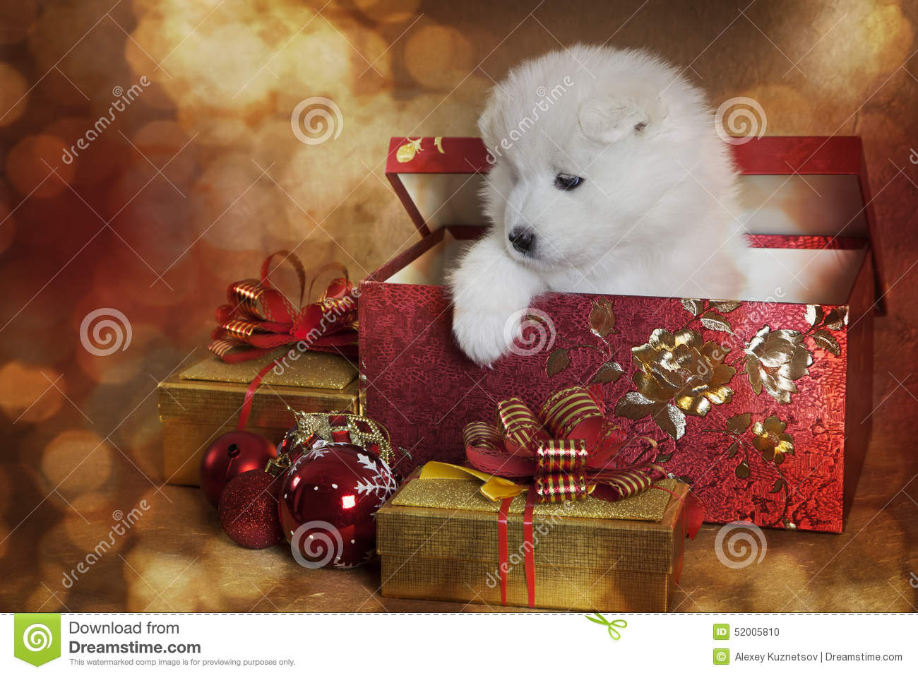 Puppies for christmas gifts