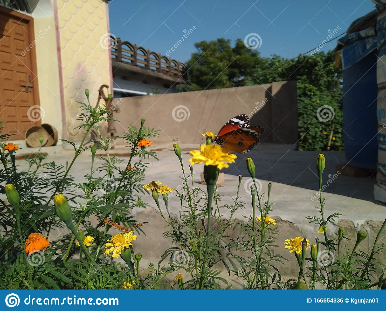 One Of The Most Beautiful Type Of Butterflie On The Flowers Looking Gorgeous Stock Photo Image Of Flowers Type 166654336