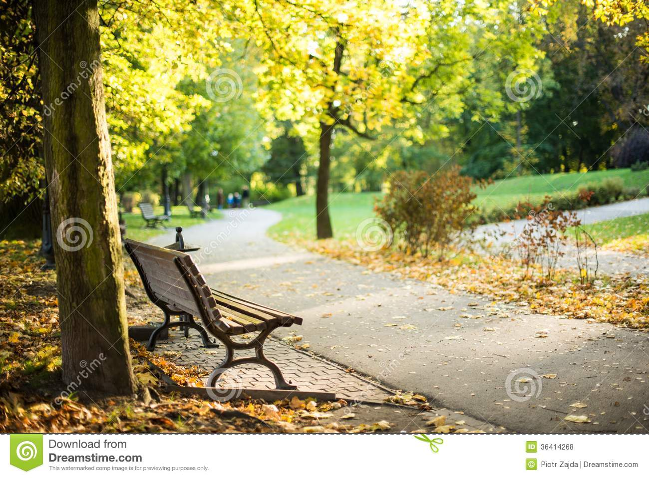 Bench in the Park in Summer Time. One Silent and Peaceful Place.