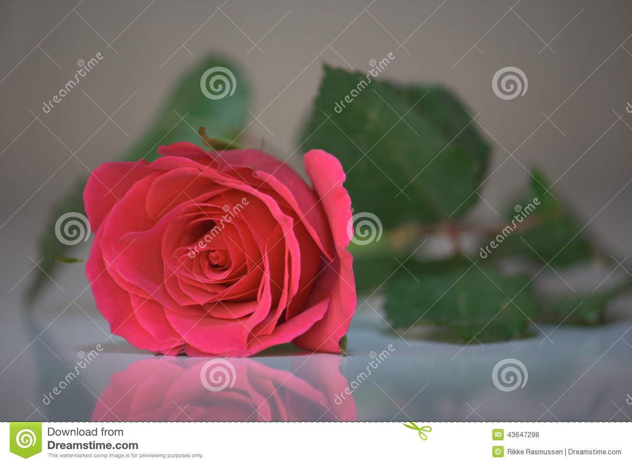 reflections on reading a rose for Isaiah 'twas foretold it, the rose i have in mind with mary we behold it, the virgin mother kind to show god's love aright, she bore to us a  read the reflection.