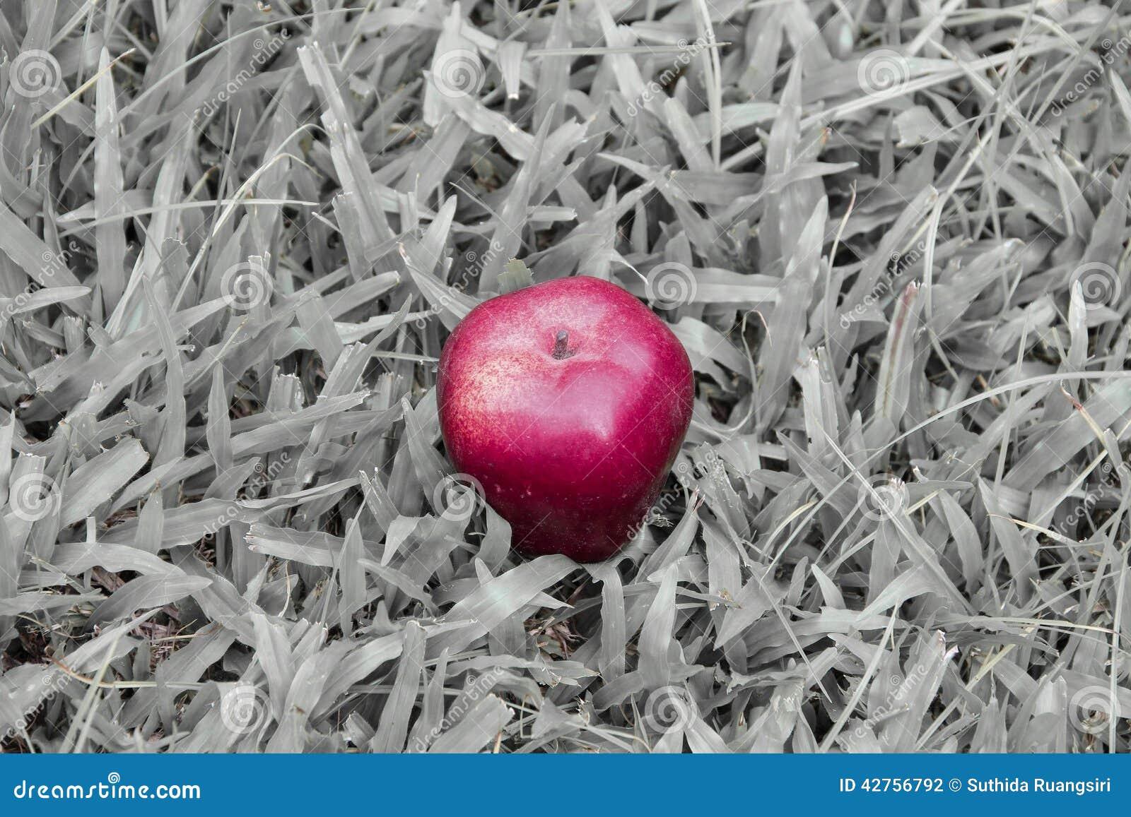 apple fruit background grass - photo #42