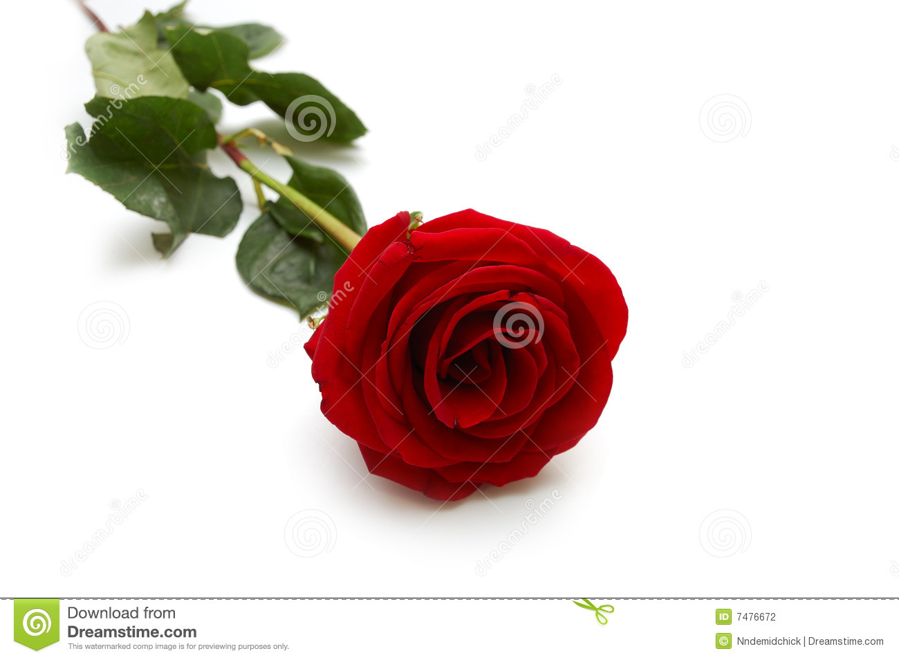 Beautiful Single Red Rose Flower Isolated Royalty Free: One Red Rose Stock Photography