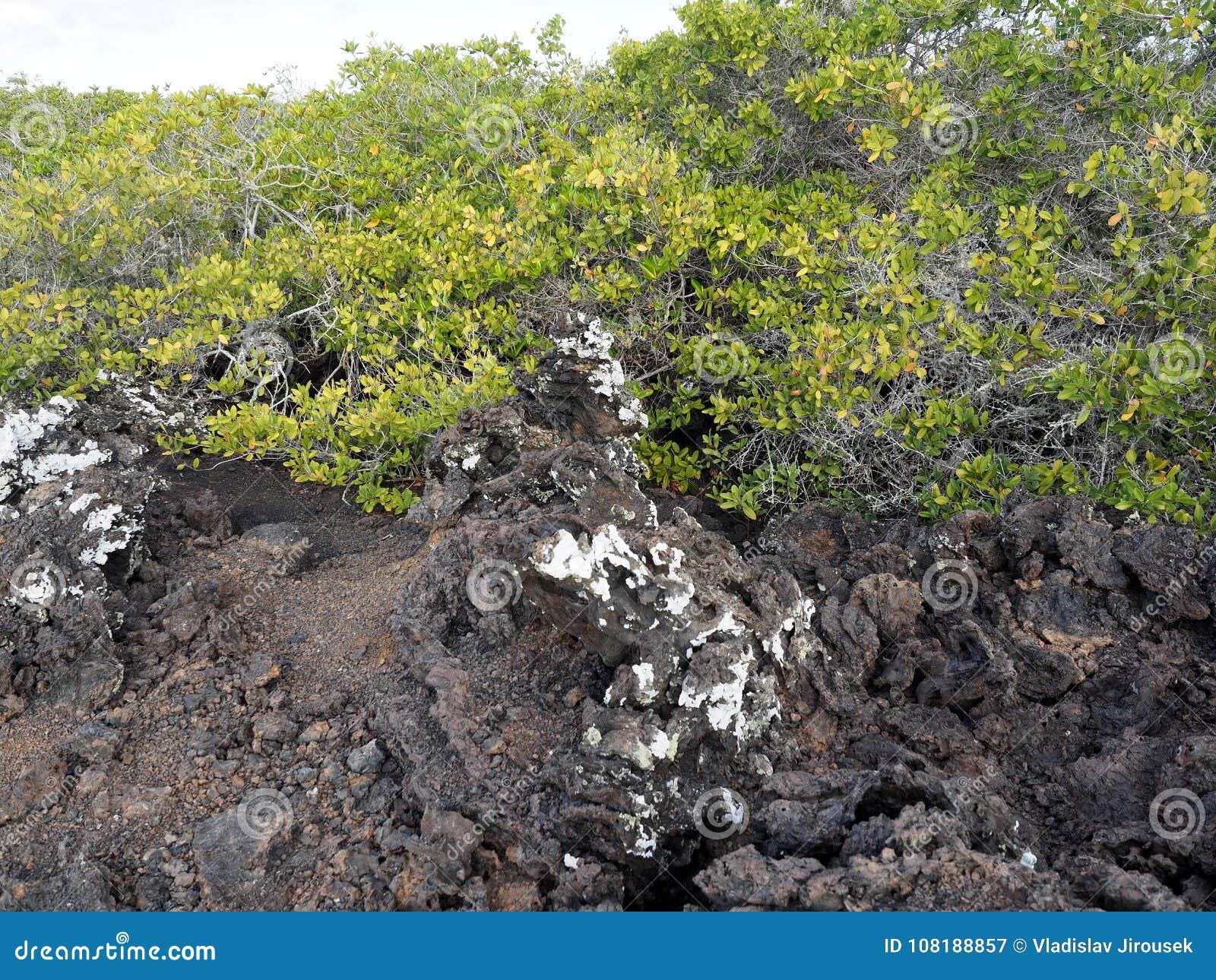 Stuffed lava on island Islote Tintoreras commemorates the moonland, Galapagos, Ecuador