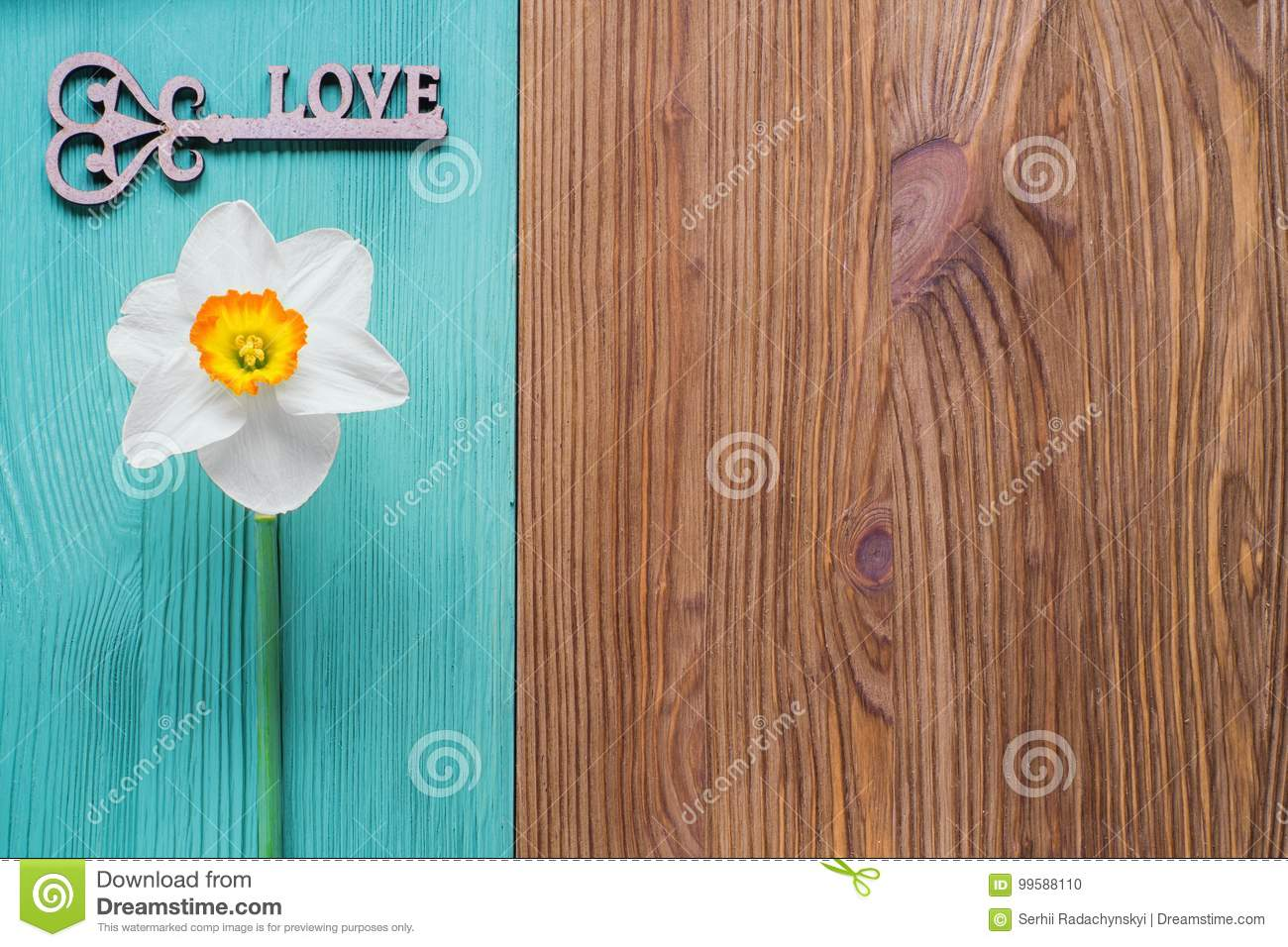 one white daffodil on a wooden background stock photo image of