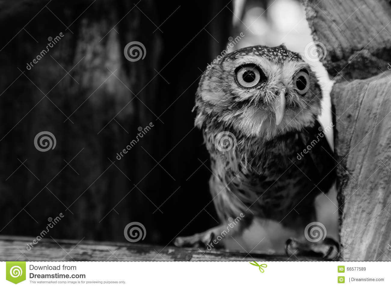 One wing left owl