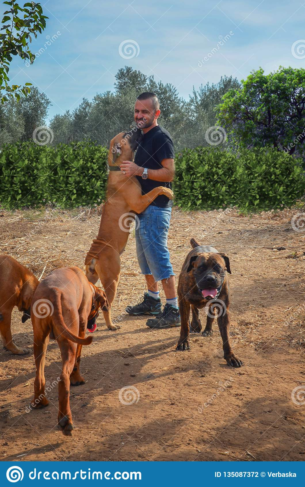 Puppies And Grown Dog Of South African Mastiff Stock Photo - Image