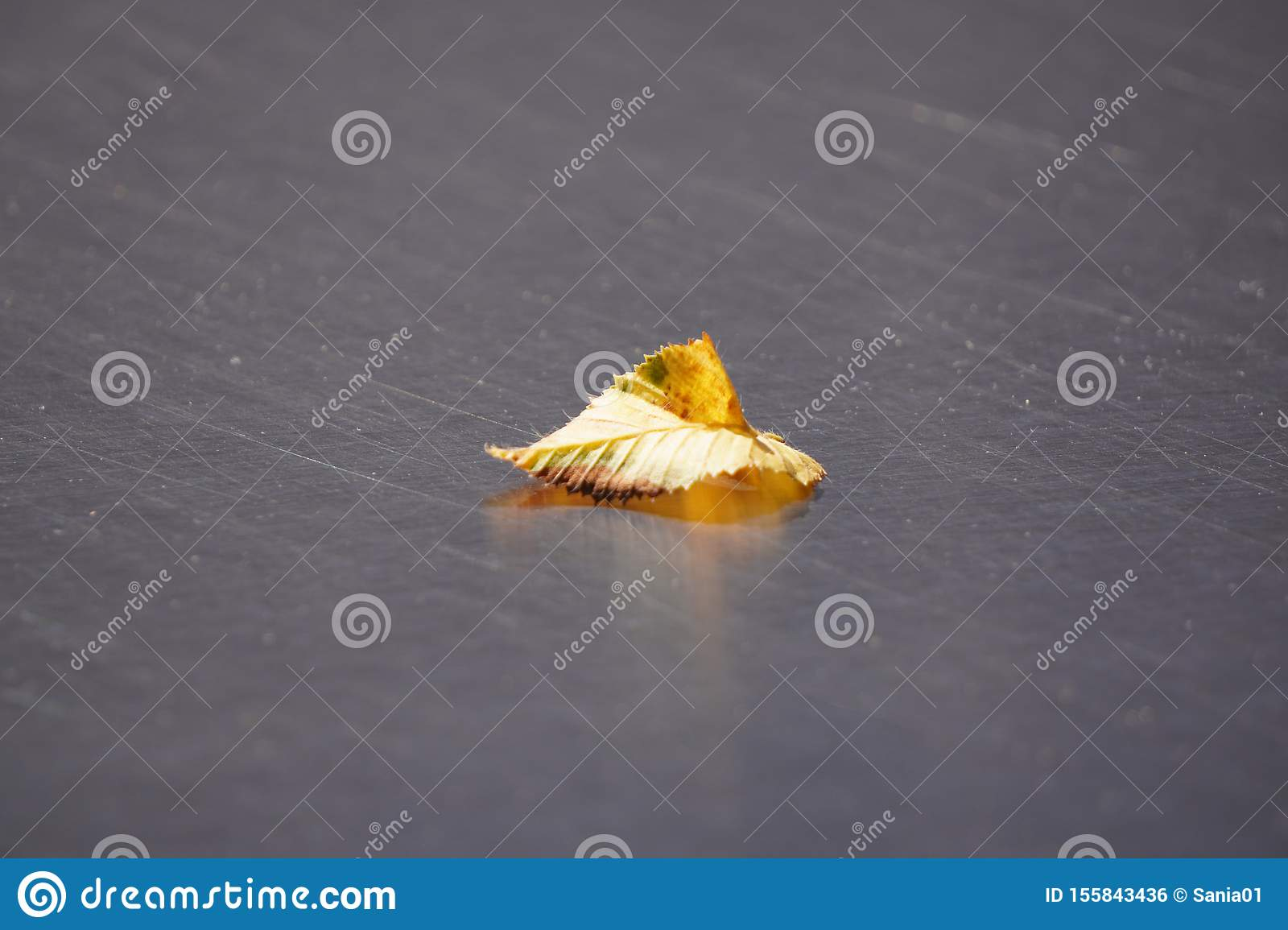 One yellow fallen leaf lies on the smooth surface of the table. the approach of autumn. withering nature before winter