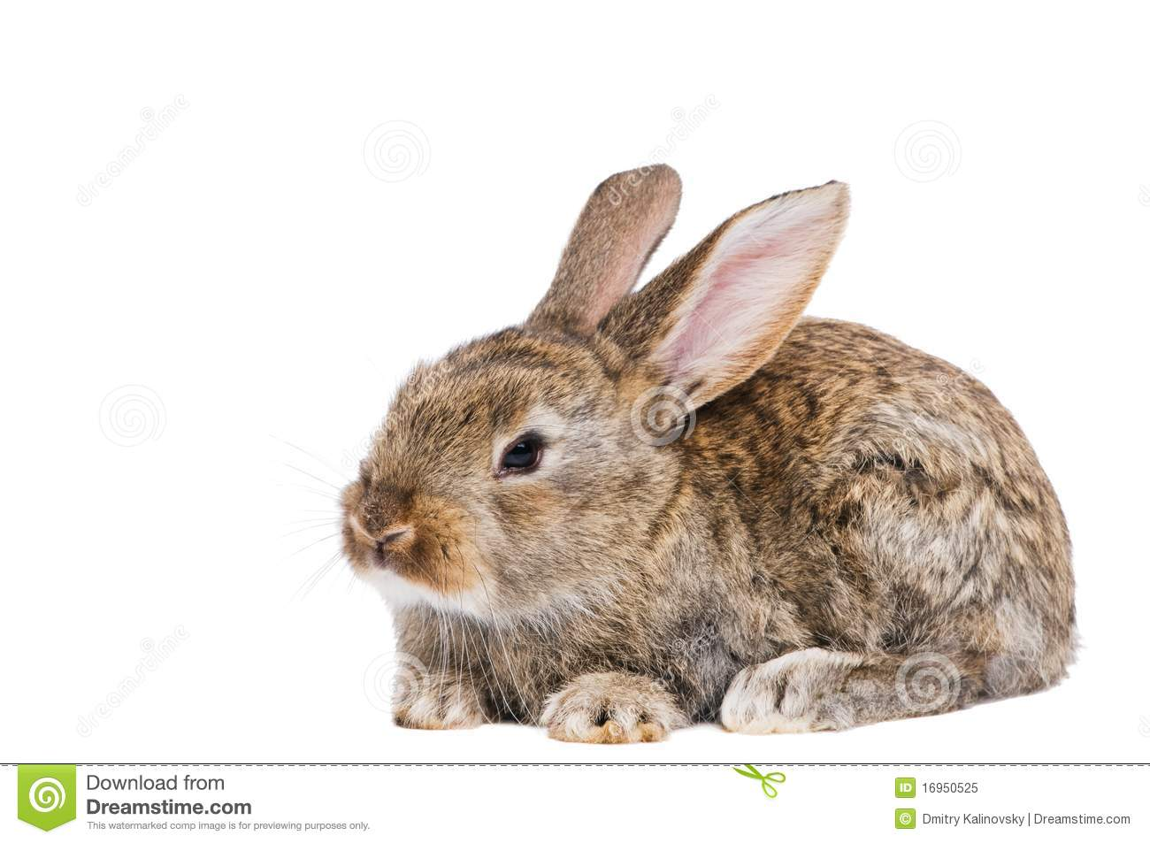 One Young Brown Rabbit Royalty Free Stock Photo - Image ...