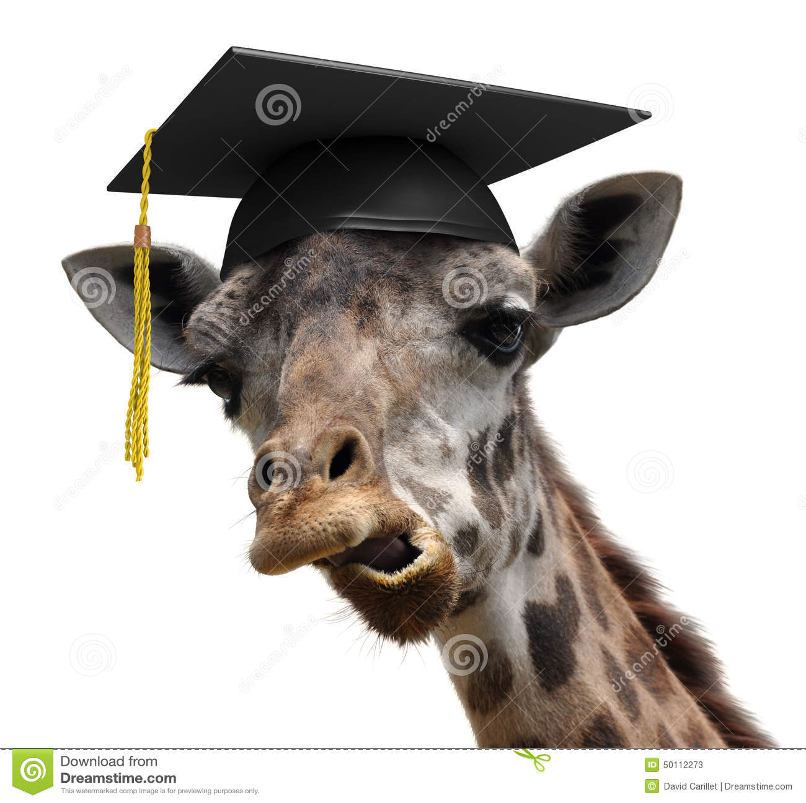 Ongebruikelijk dierlijk portret van een malle student van het girafgegradueerde