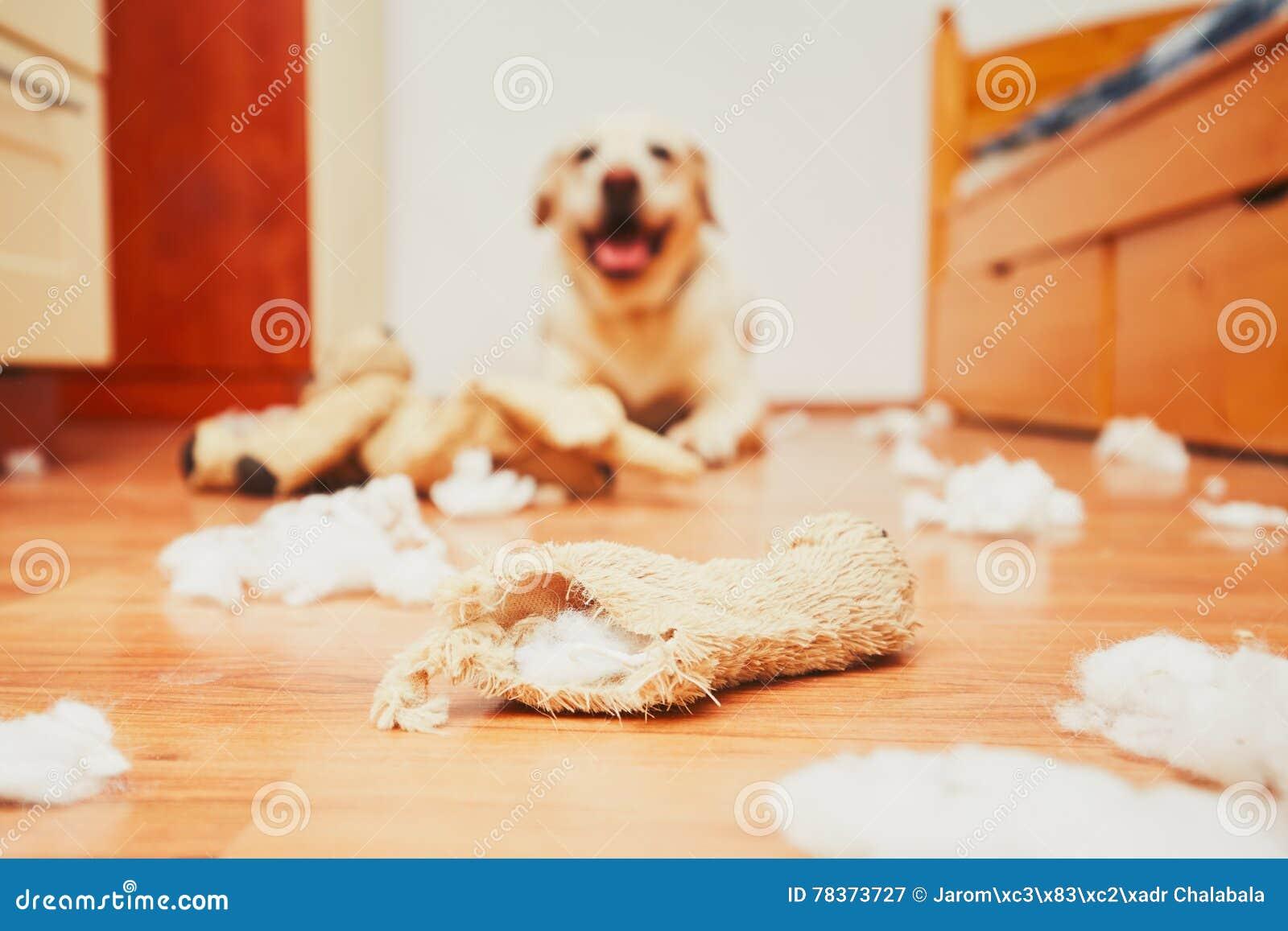 Ongehoorzaam hond alleen huis