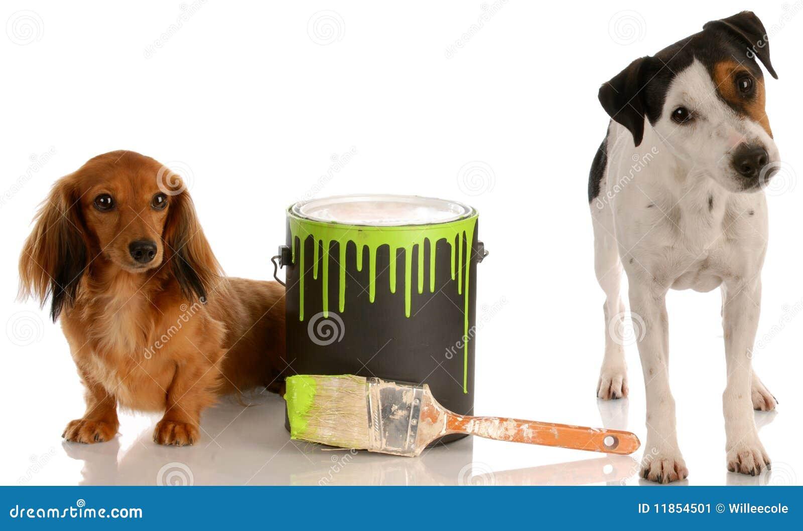 Ongehoorzame honden
