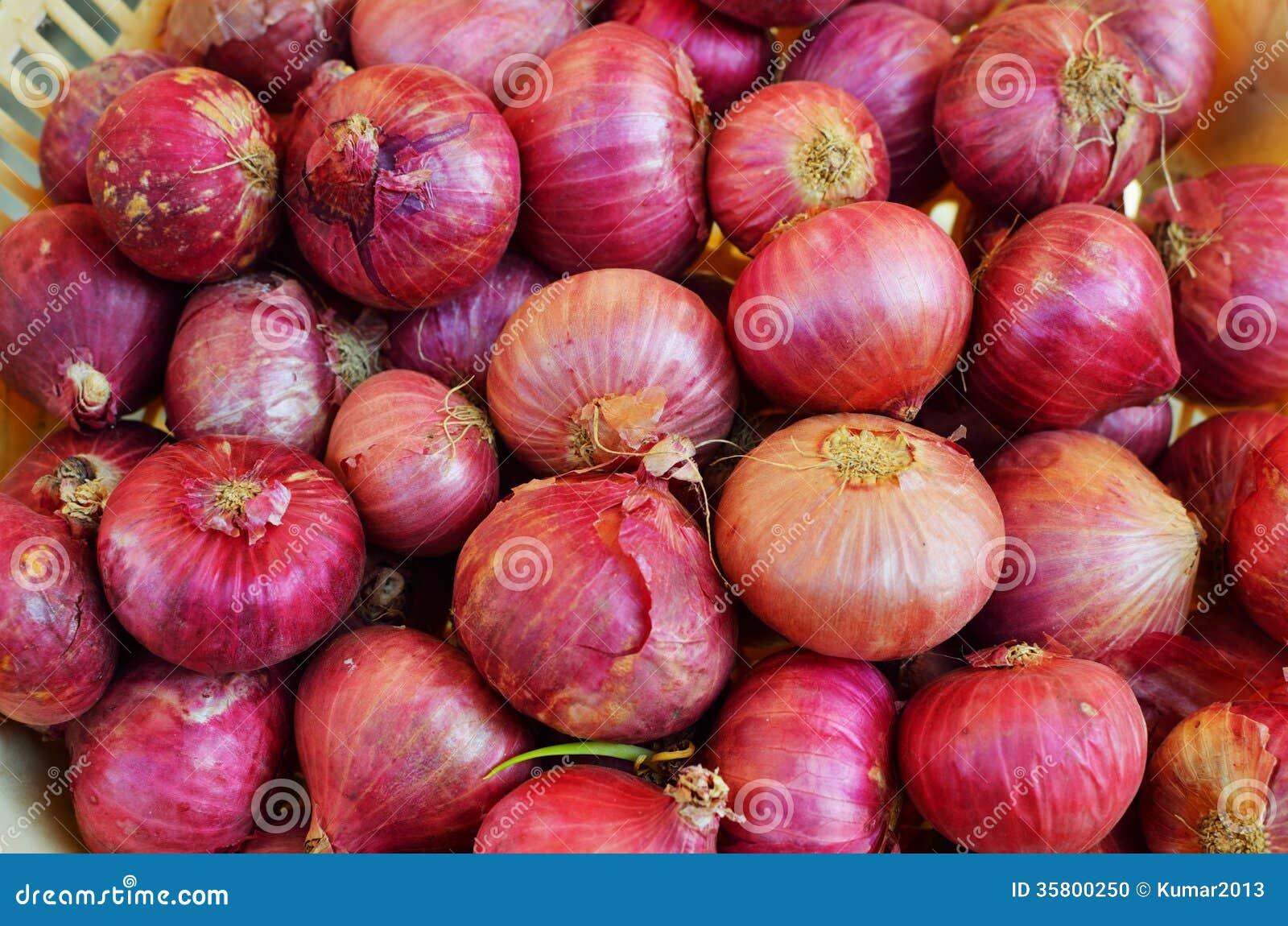 Onion or Allium cepa