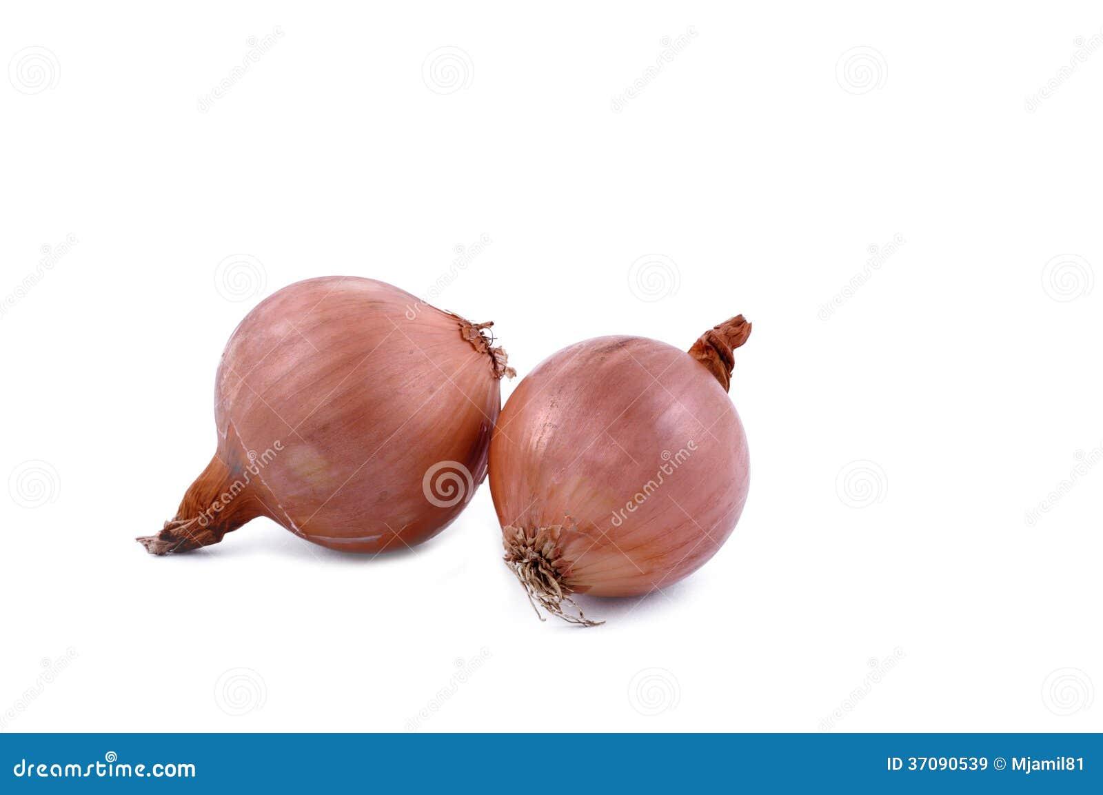how to grow an onion from a bulb