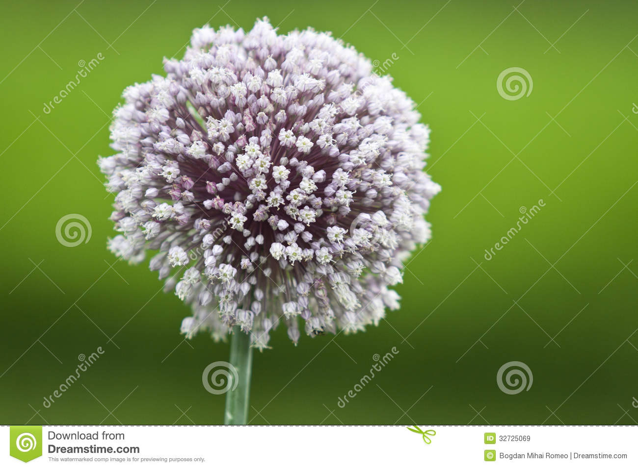 ion Flower Royalty Free Stock Image