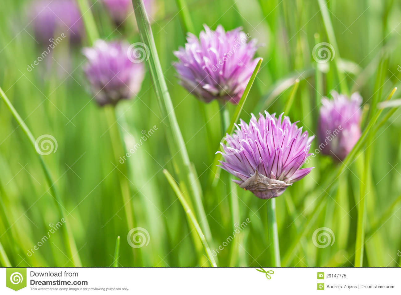 ion Flowers Royalty Free Stock Image