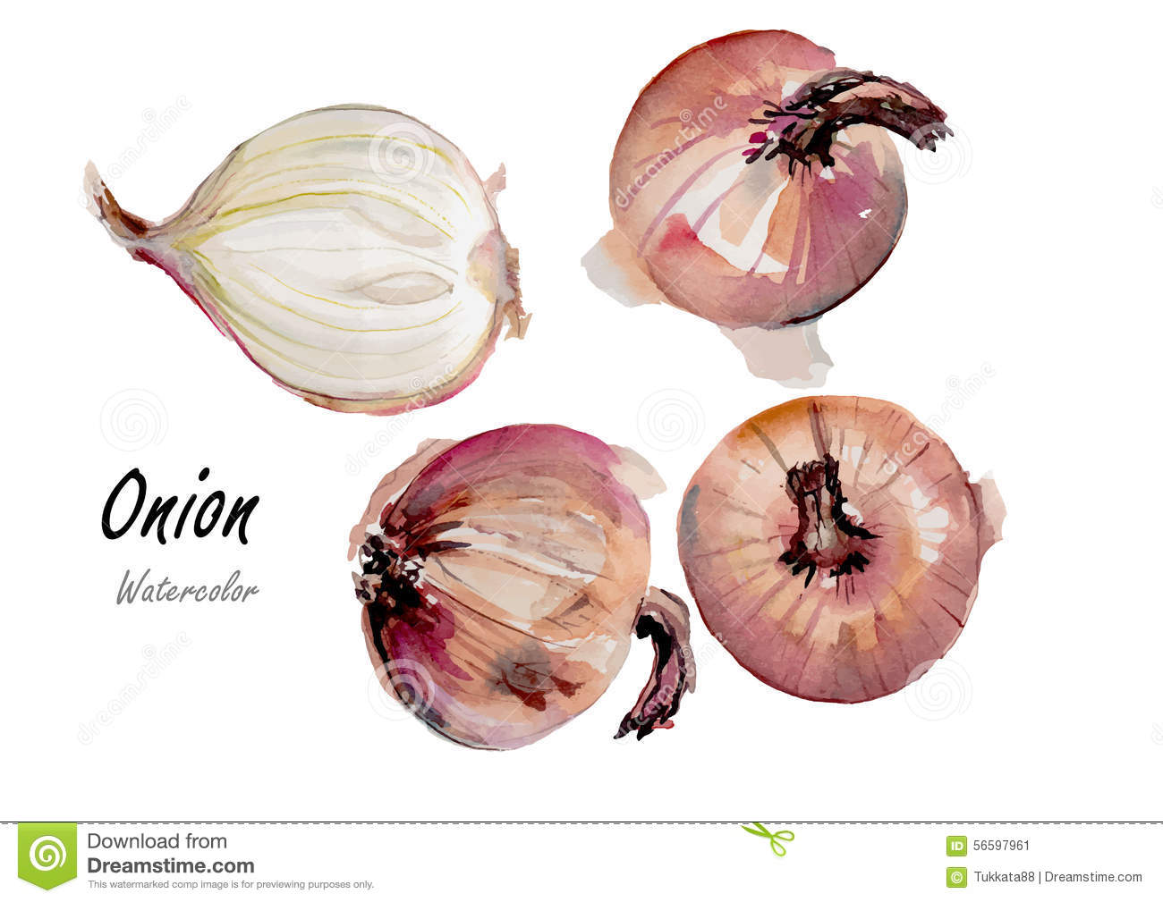 how to grow an onion from another onion white