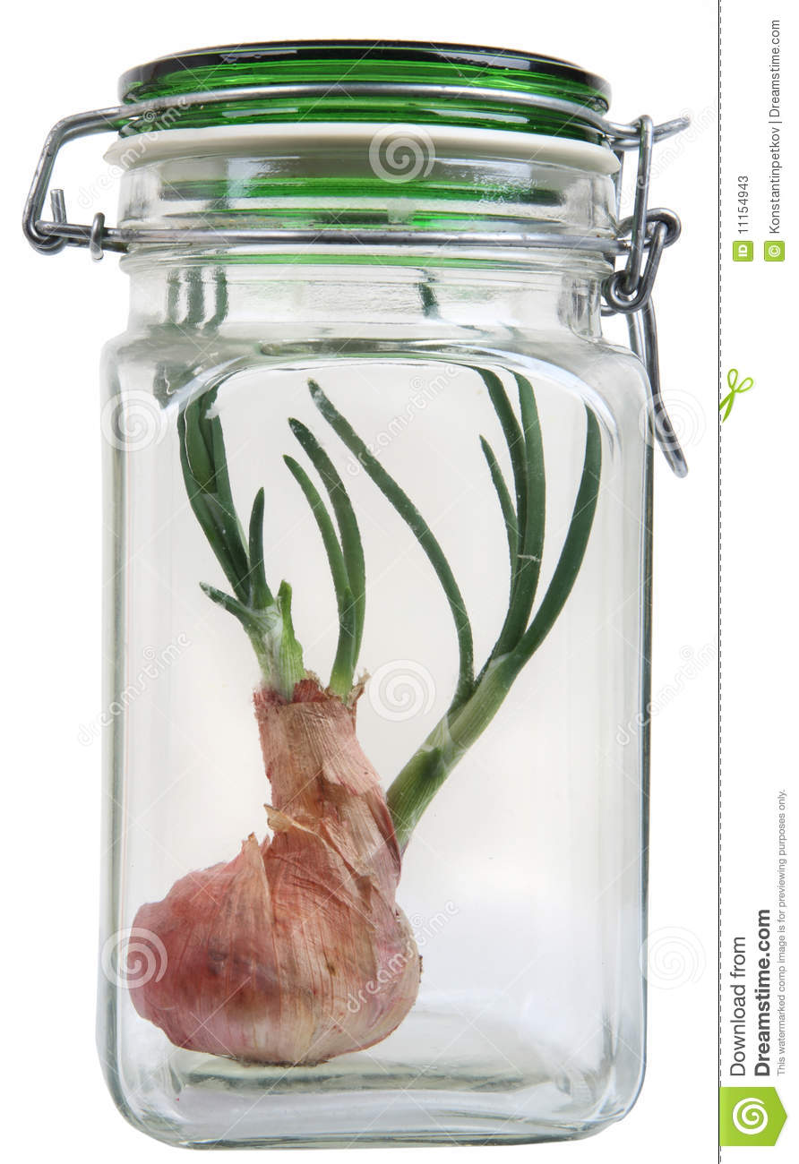how to grow spring onions in a jar