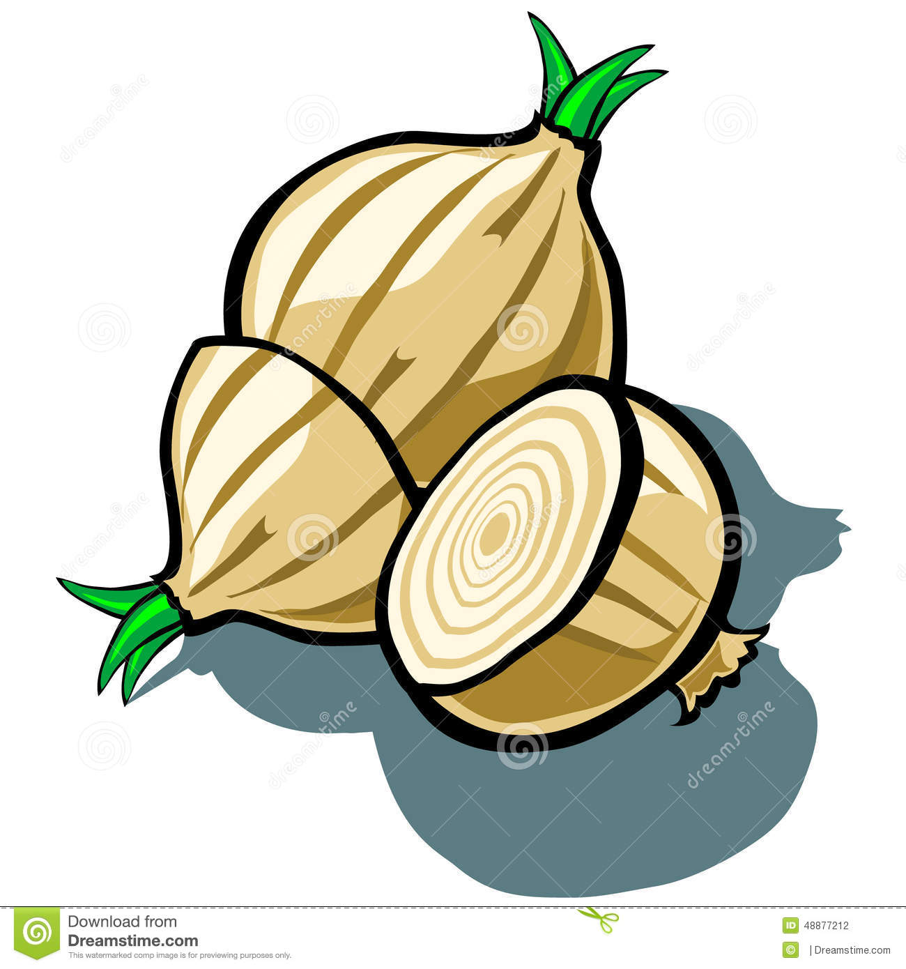 Onion and Slice stock vector. Illustration of nature ...