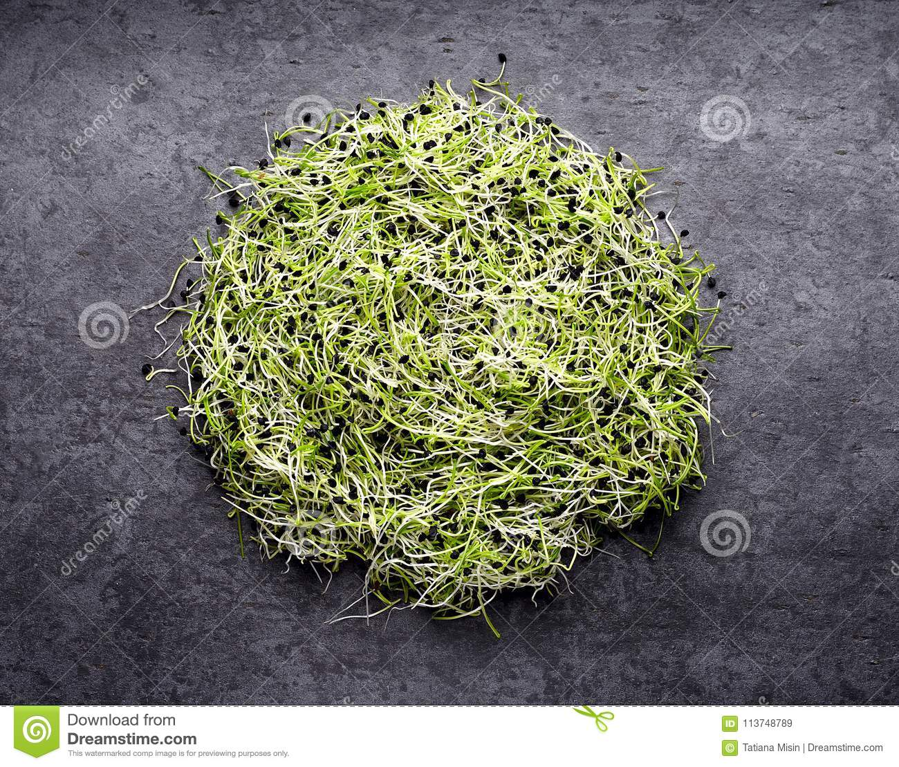 Onion Sprouts On Black Background Stock Image Of Sprout Algea Top